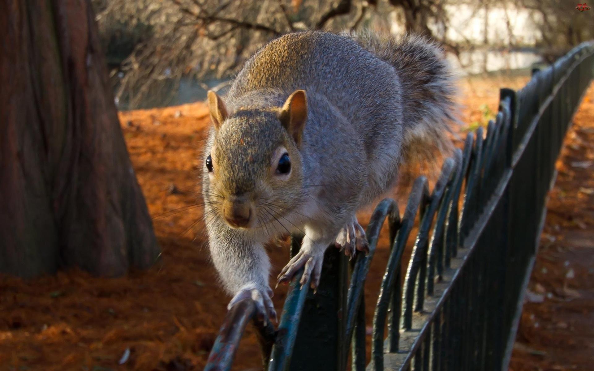 Wiewiórka, Pień, Ogrodzenie, Park