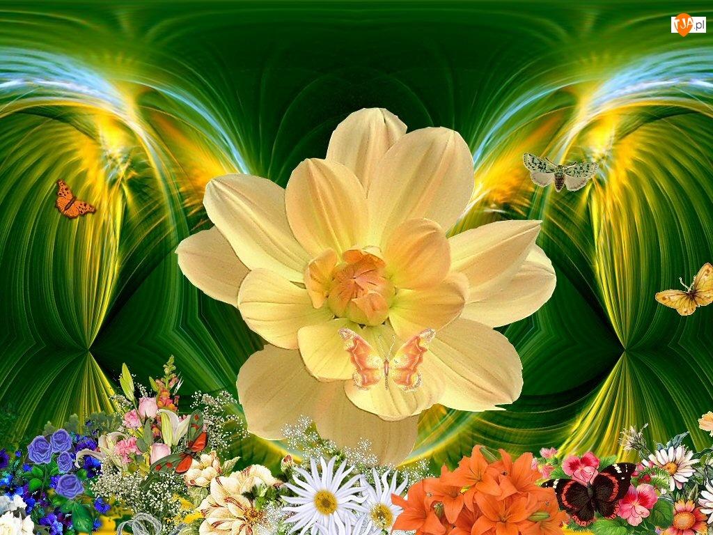 Motyle, Ogród, Kwiaty