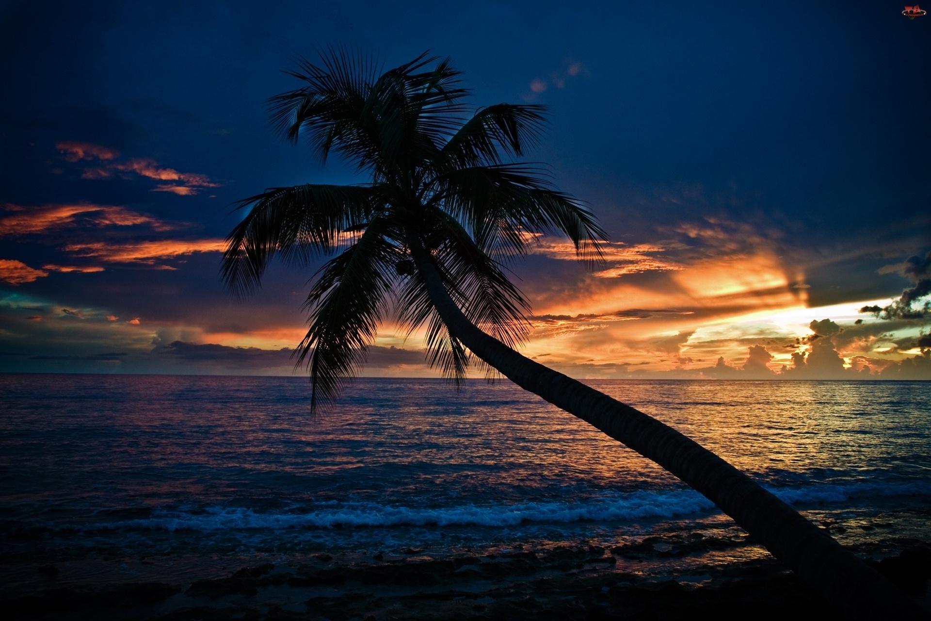 Zachód, Morze, Słońca, Palma