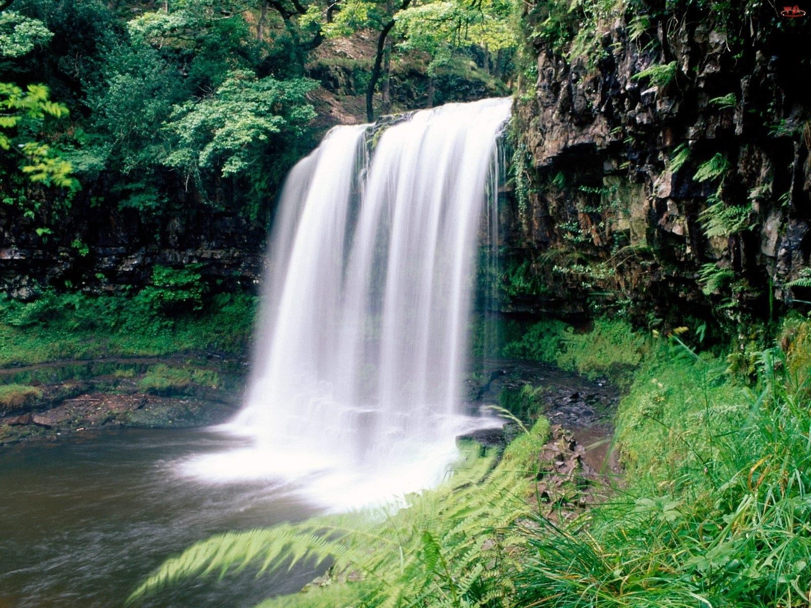 Las, Wodospad, Skała