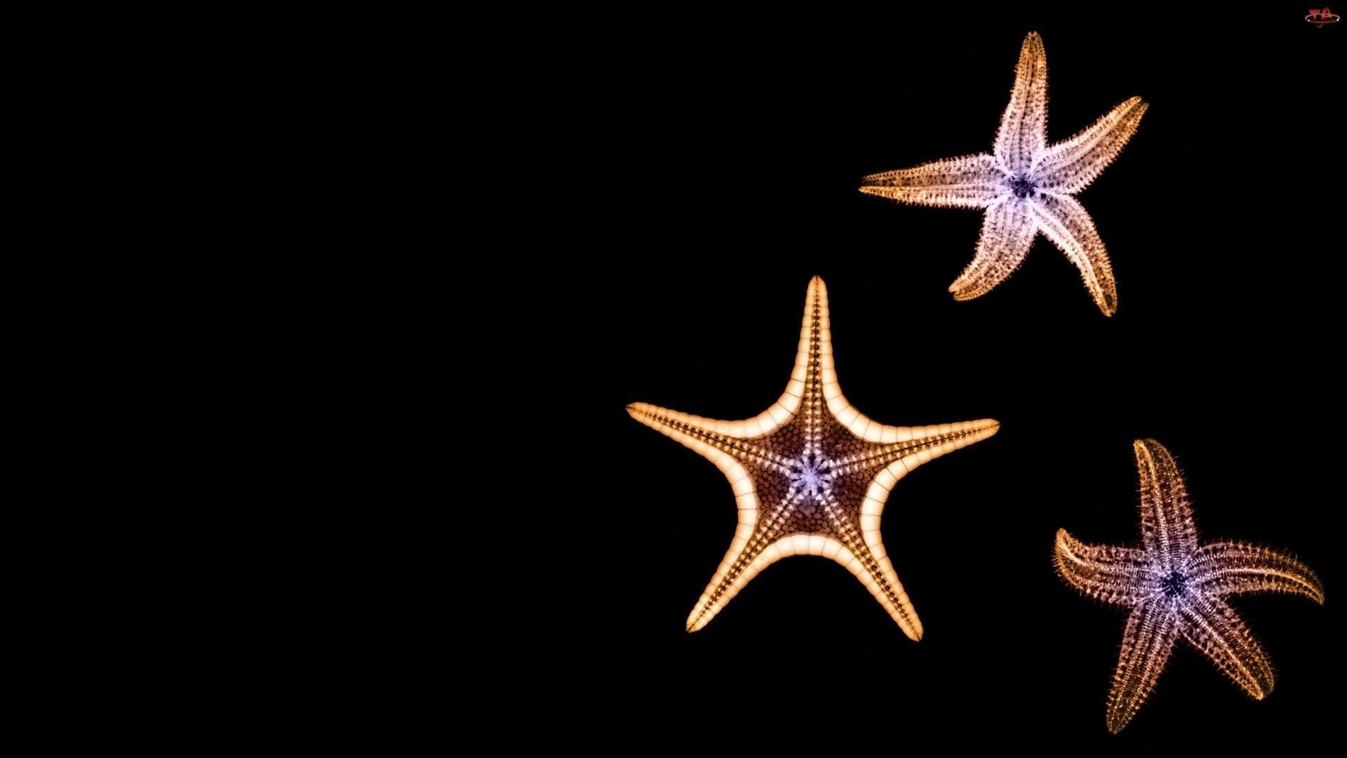 Morze, Rozgwiazdy, Szkarłupnie
