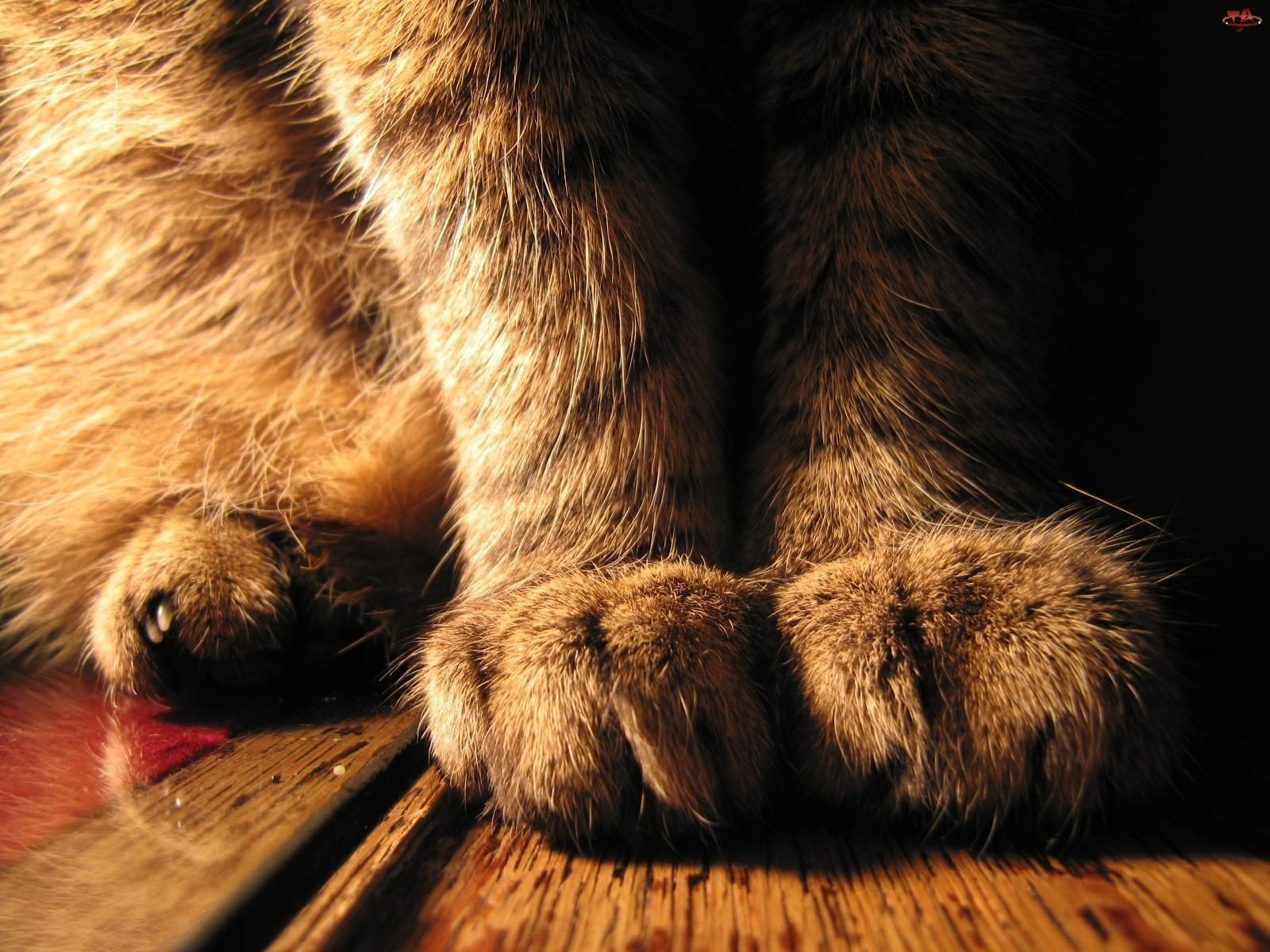 Kot, Podłoga, Łapy, Pazury