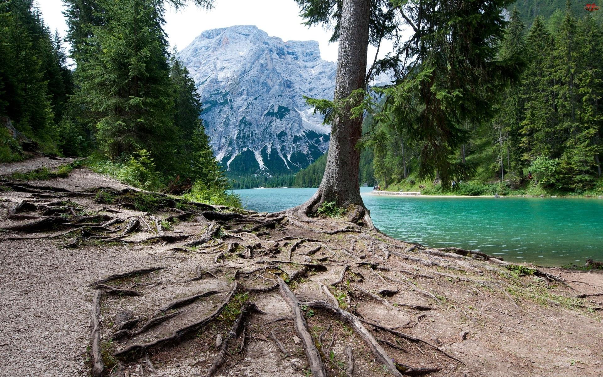 Jezioro, Góry, Drzewa, Korzenie