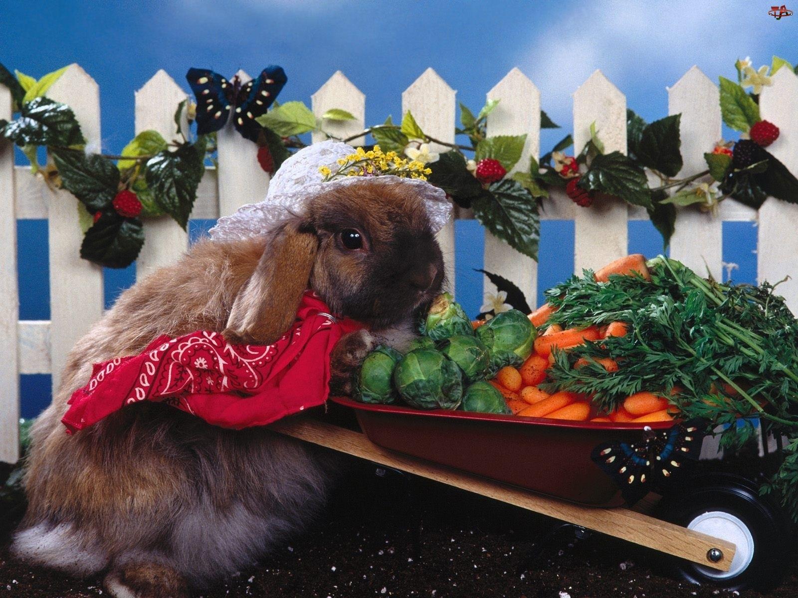 Króliczek, Warzywa, Kapelusz, Taczka