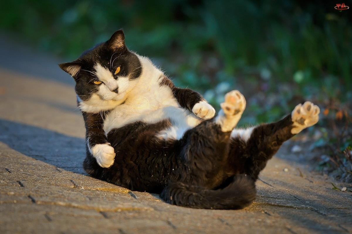 Kot, Przewrotka