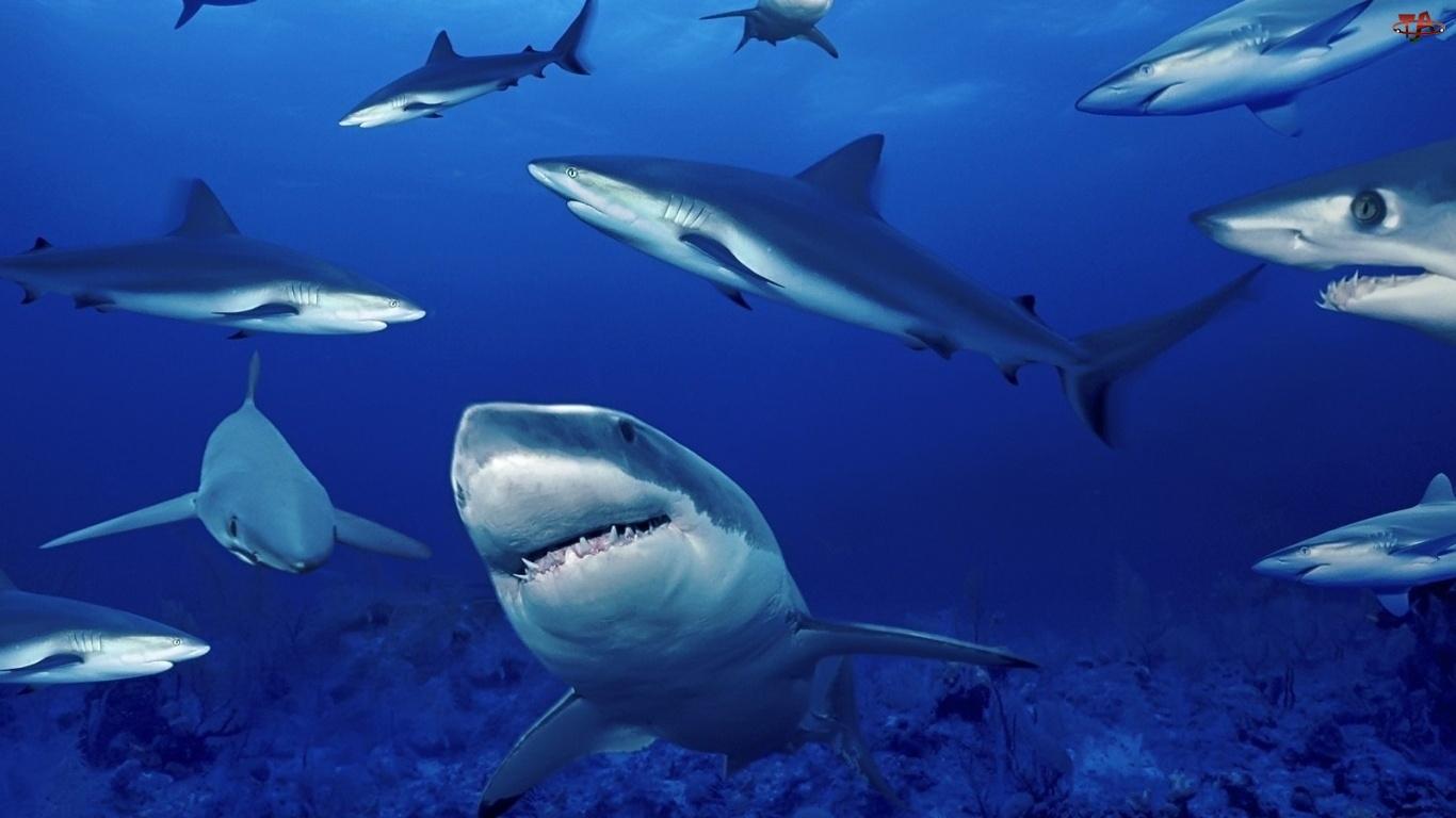 Rekiny, Głębia