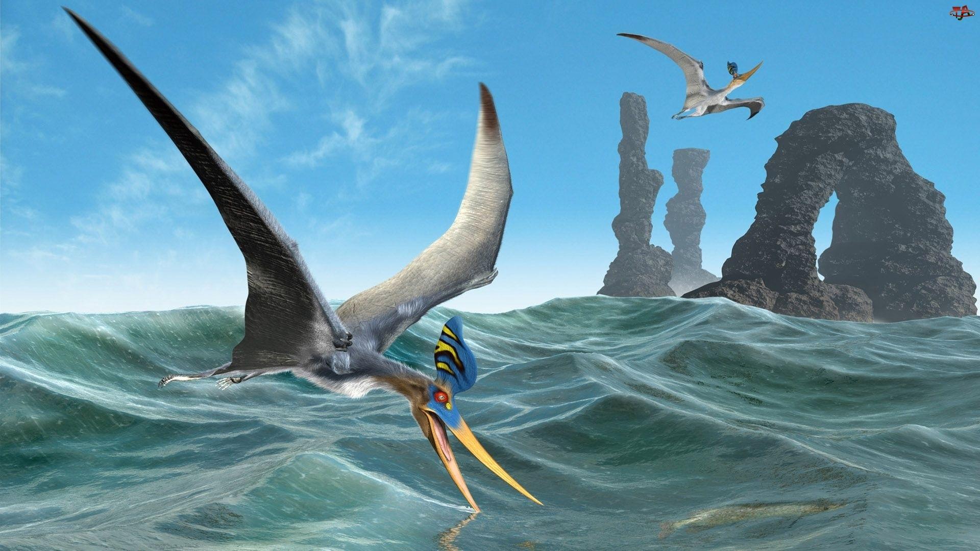 Skały, Morze, Pterozaury