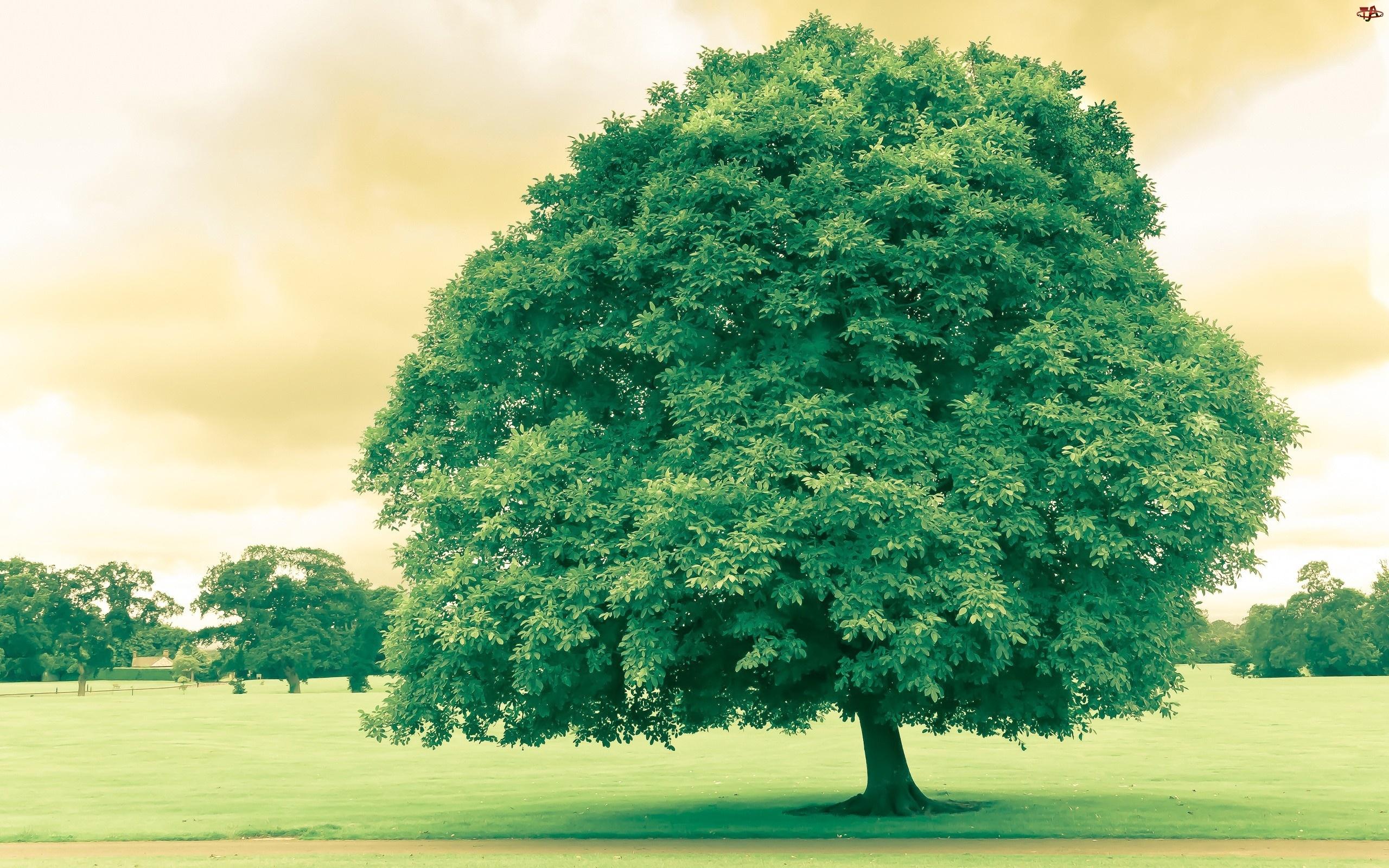 Trawnik, Drzewa