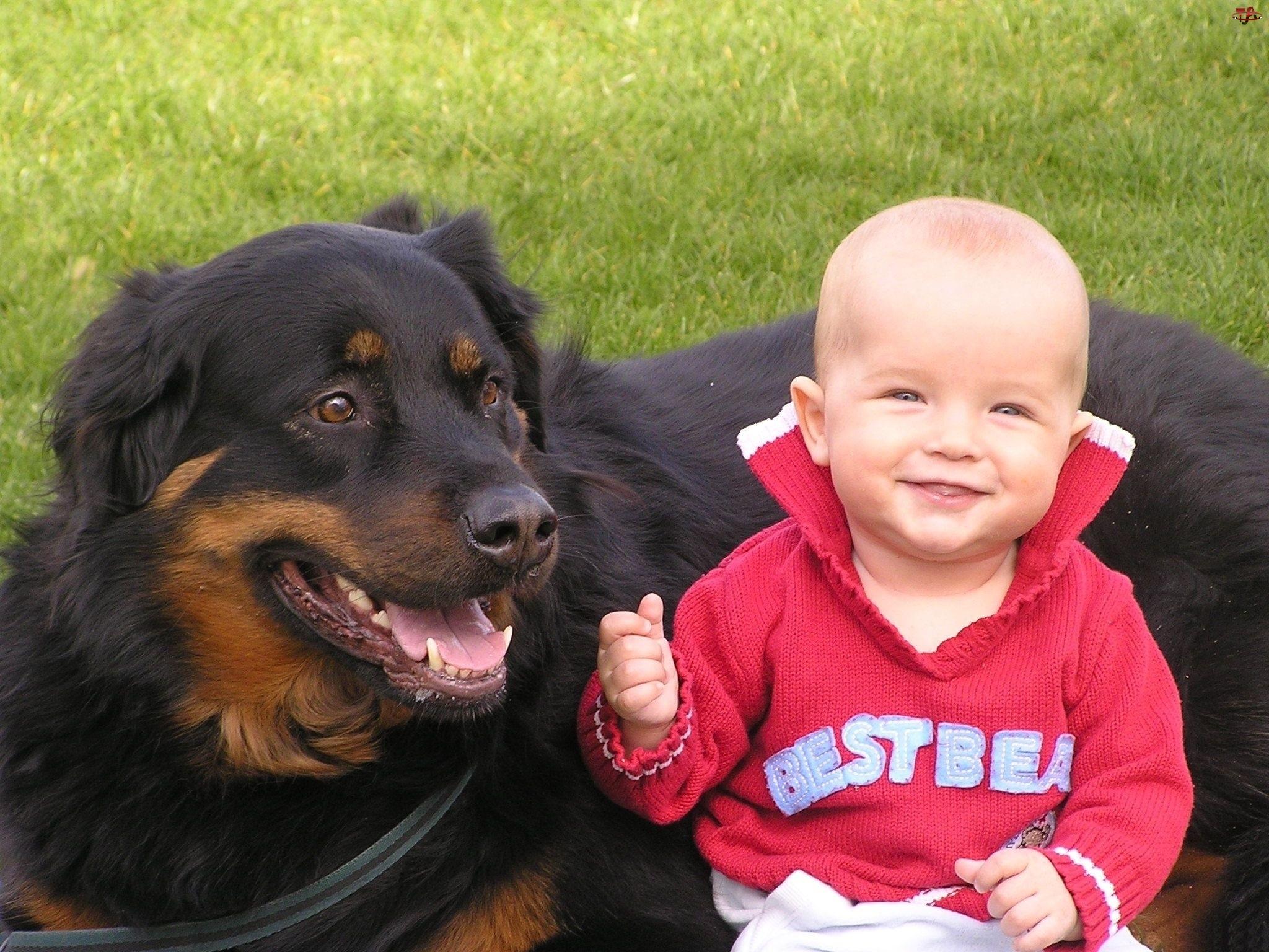 Pies, Chłopiec, Łąka
