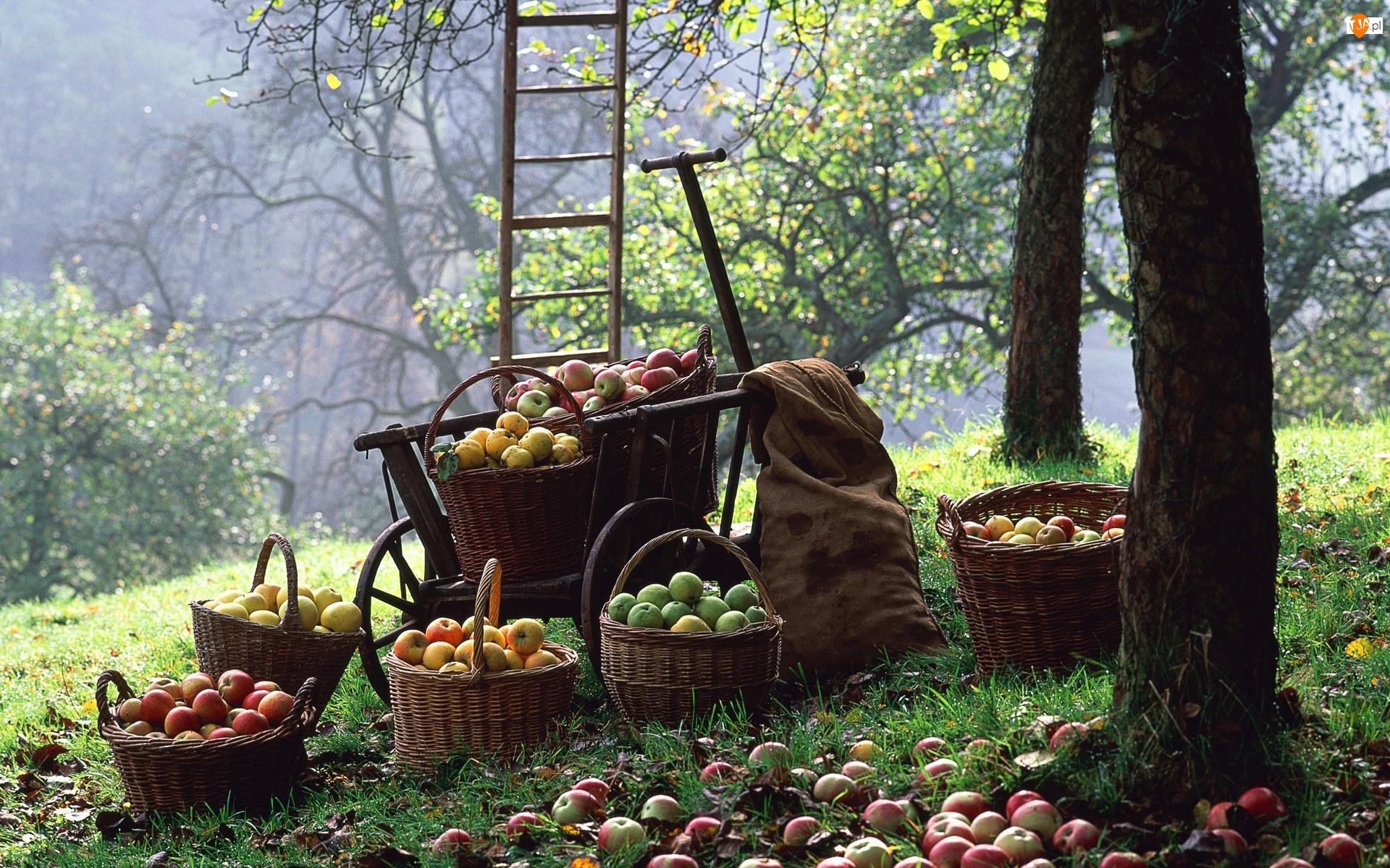 Jabłek, Sad, Kosze