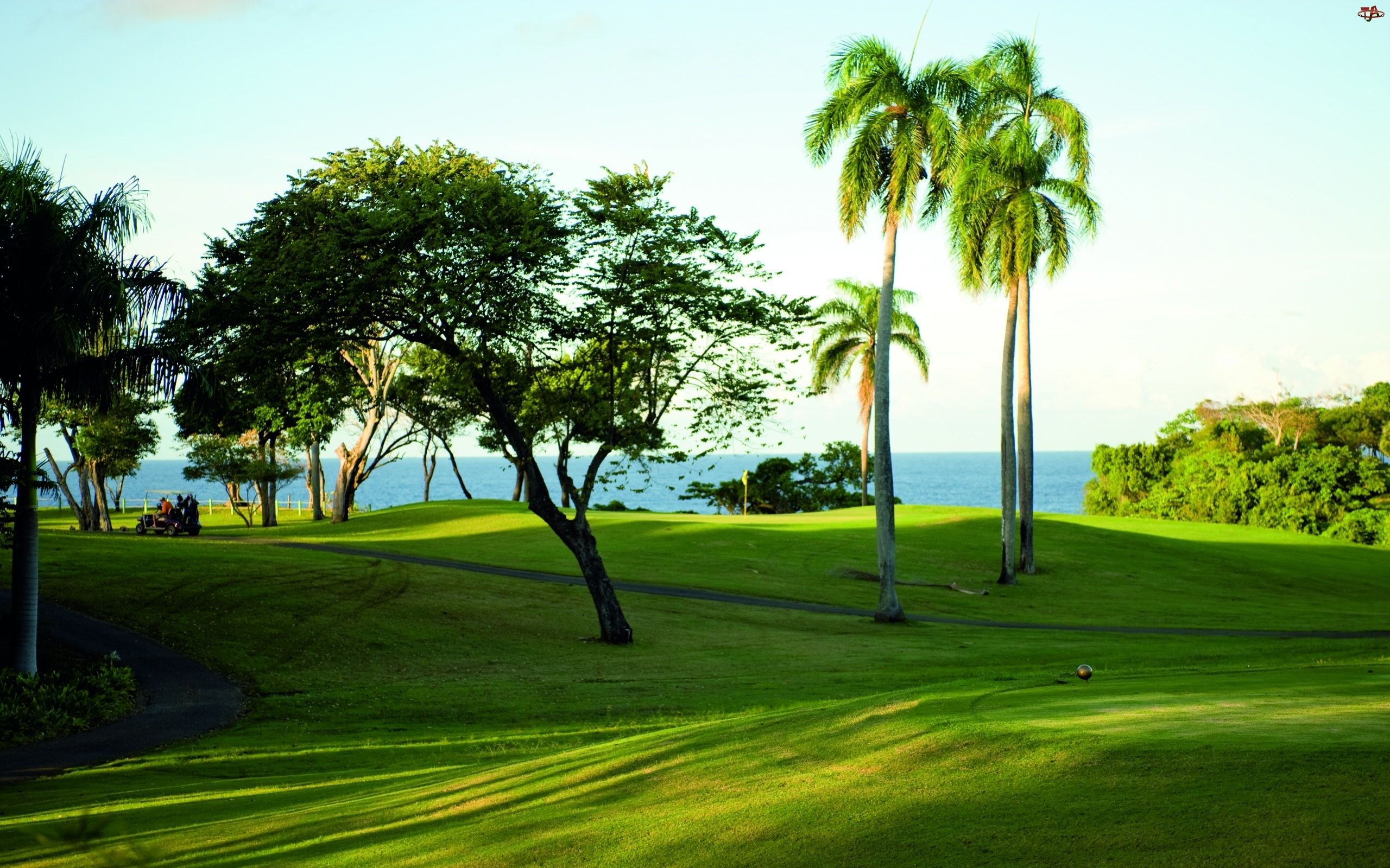 Pole, Morze, Golfowe, Drzewa