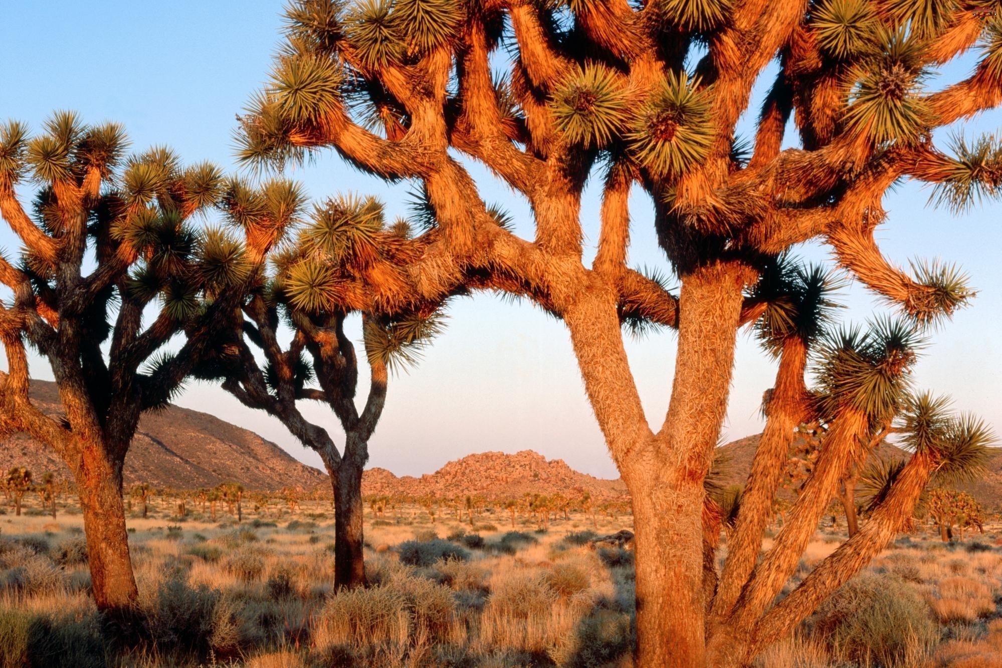 Kalifornia, Słońce, Góry, Drzewa