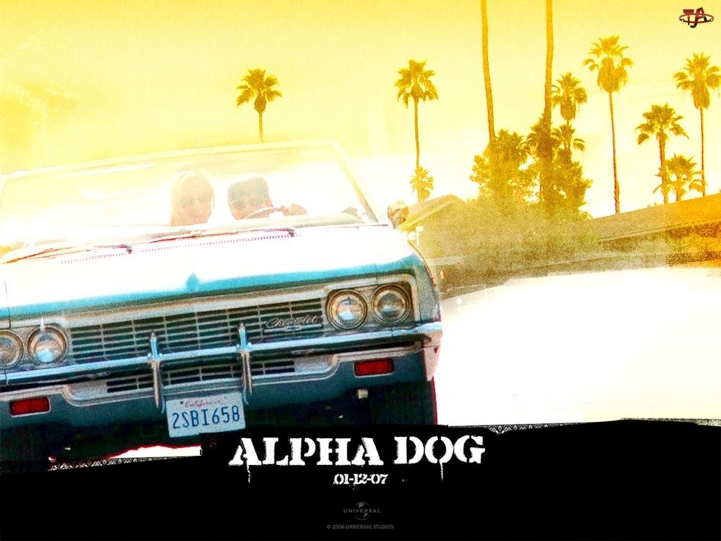 palmy, Alpha Dog, samochód