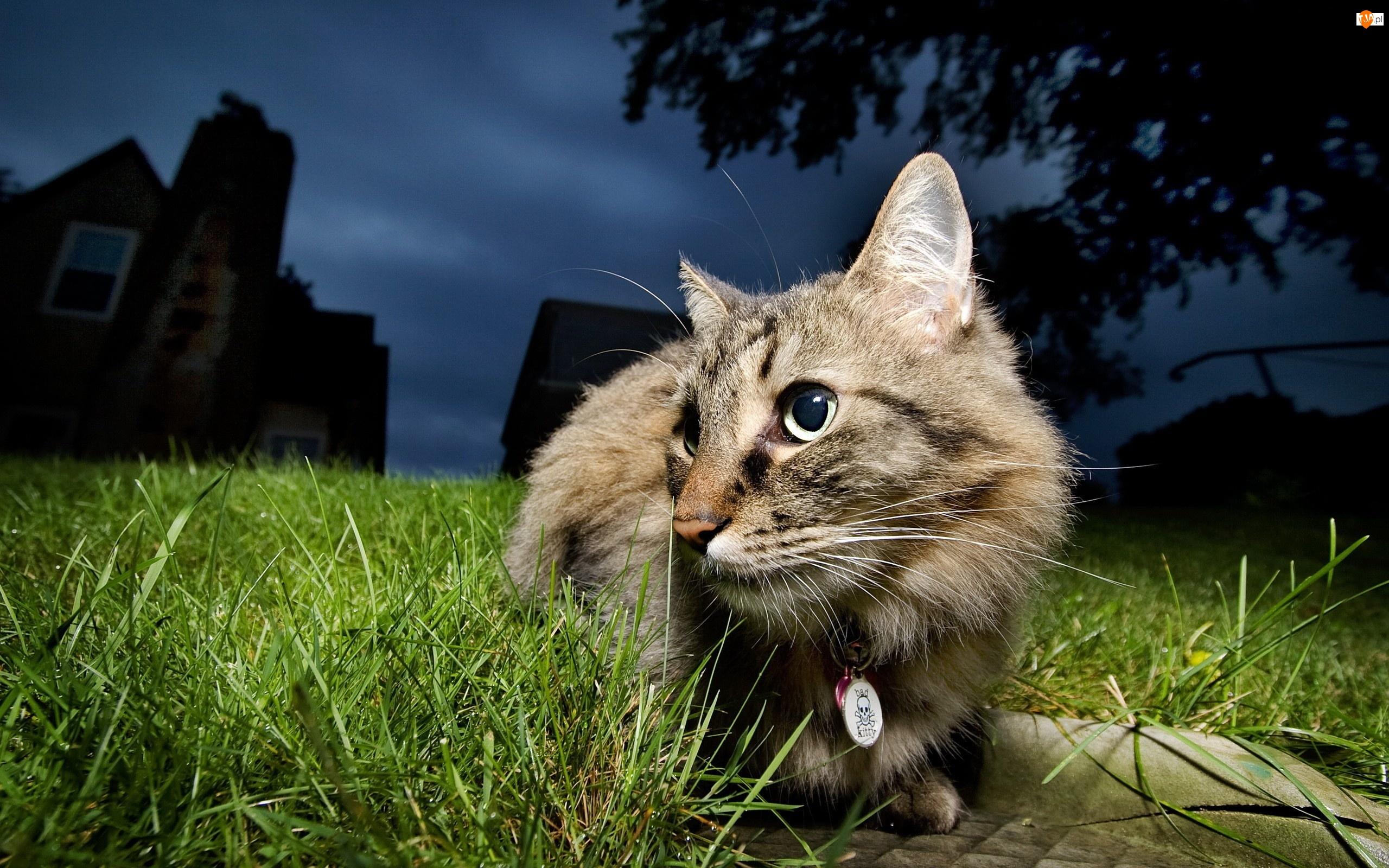 Trawnik, Bury, Kot