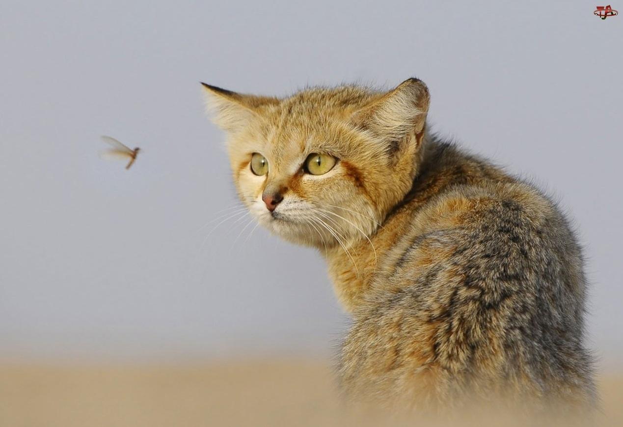 Polowanie, Kot, Owad