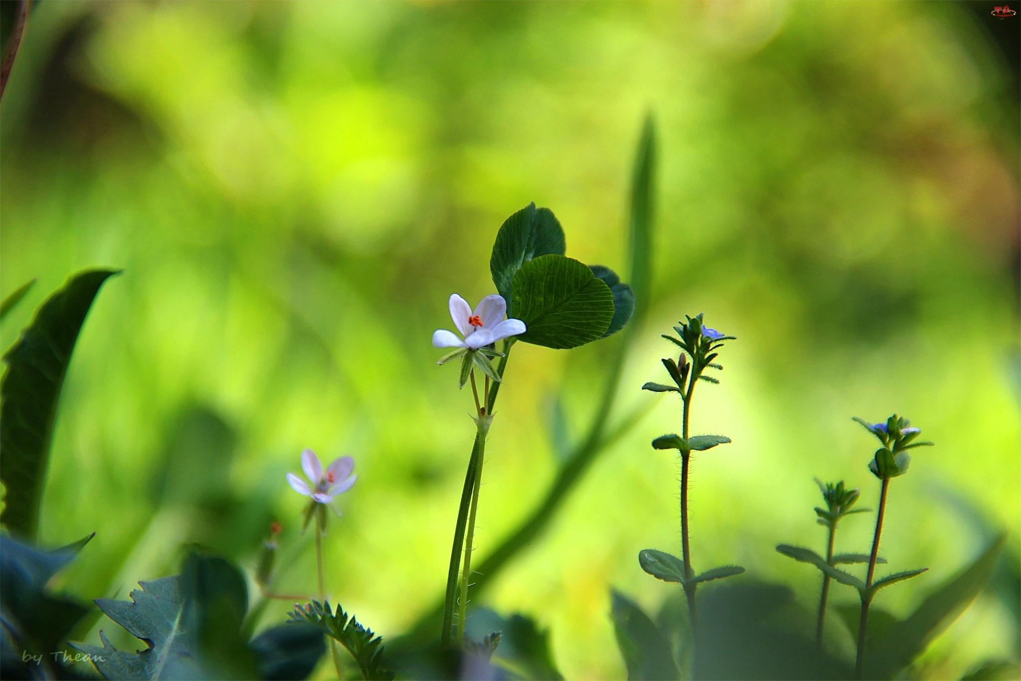 Trawa, Drobne, Kwiatuszki