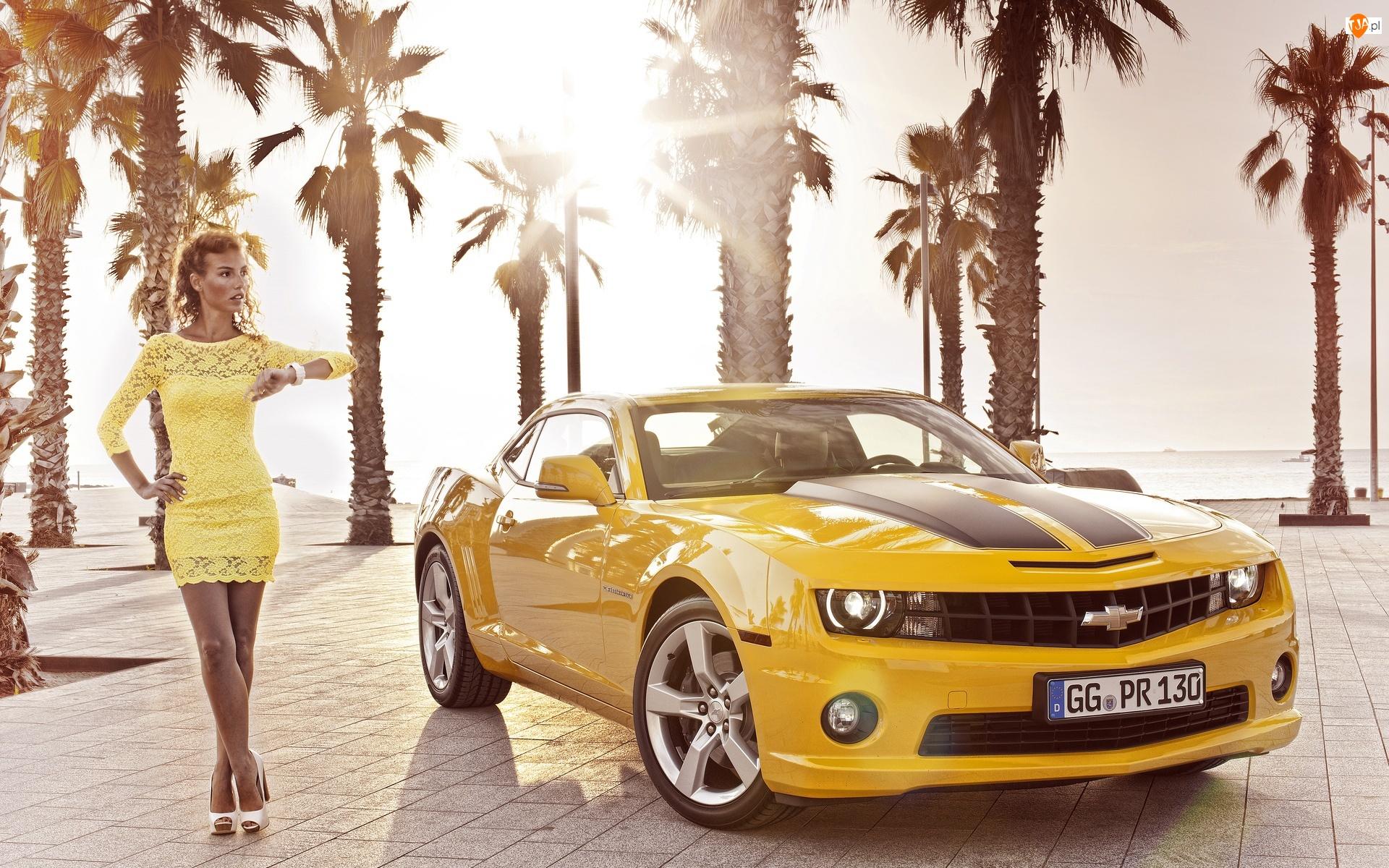 Żółty, Palmy, Chevrolet Camaro, Kobieta