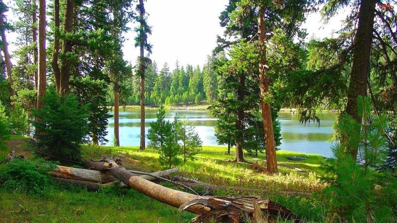 Las, Drzewo, Rzeka, Powalone