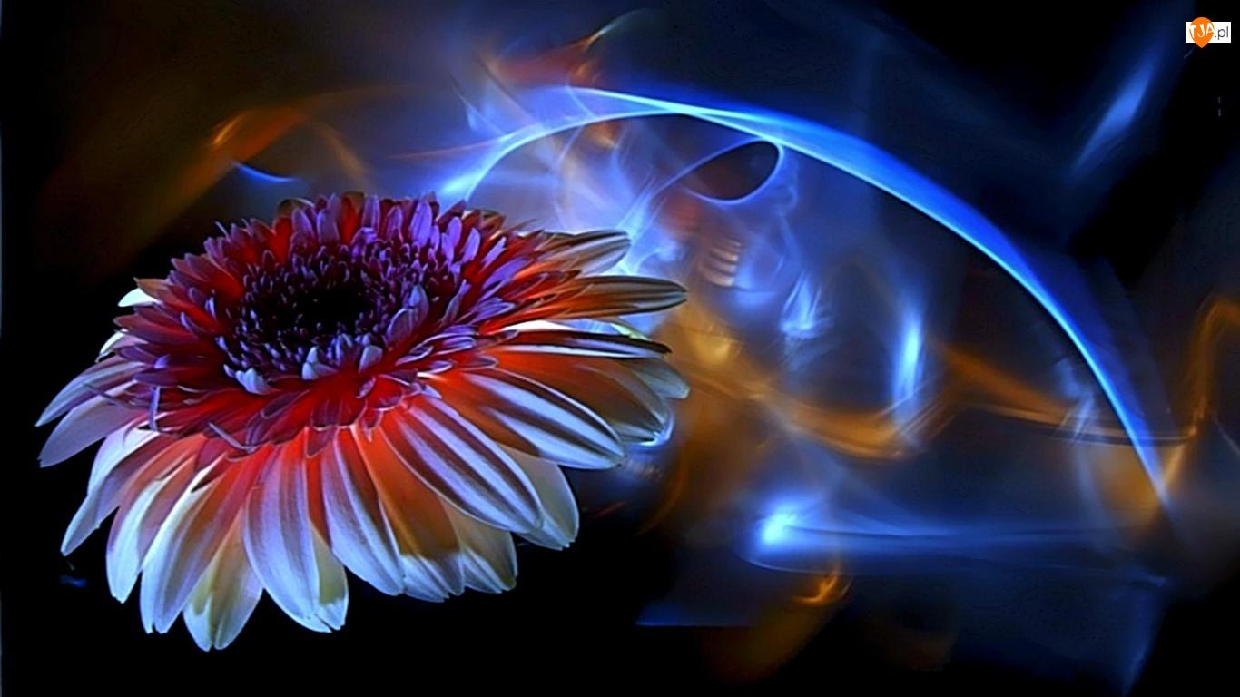 Światła, Kwiat, Refleksy