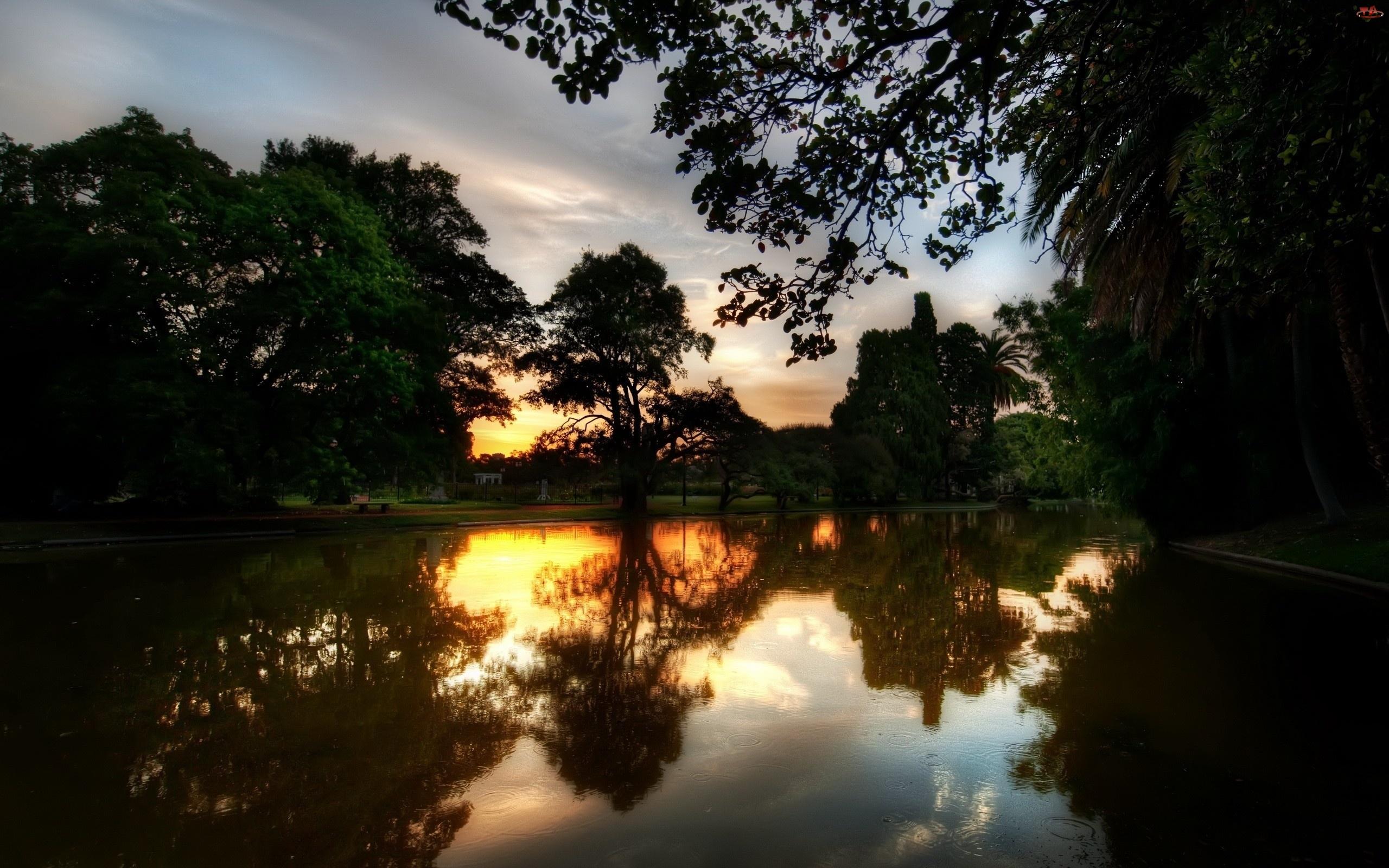 Ławeczka, Rzeka, Drzewa