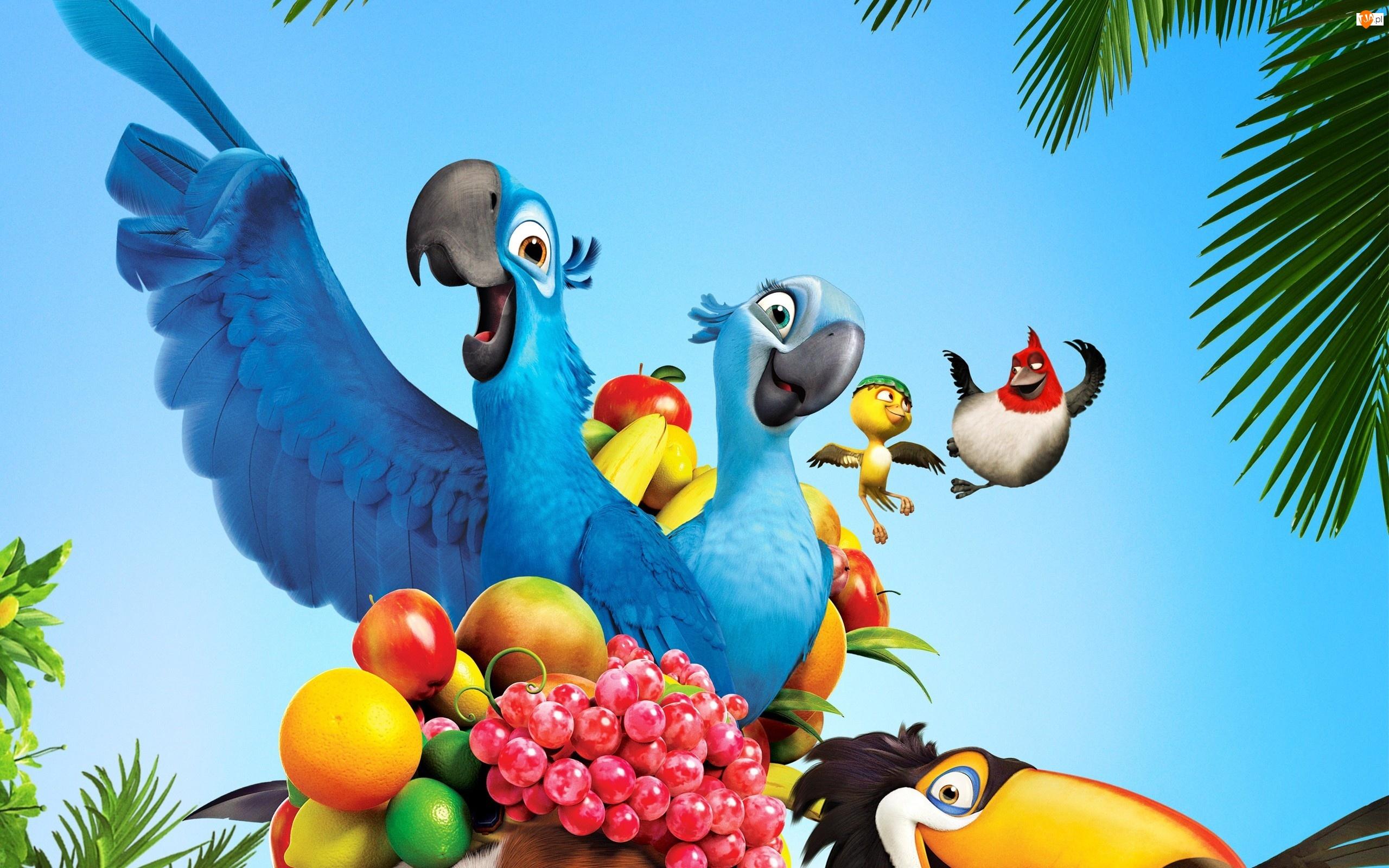 Owoce, Rio, Papugi