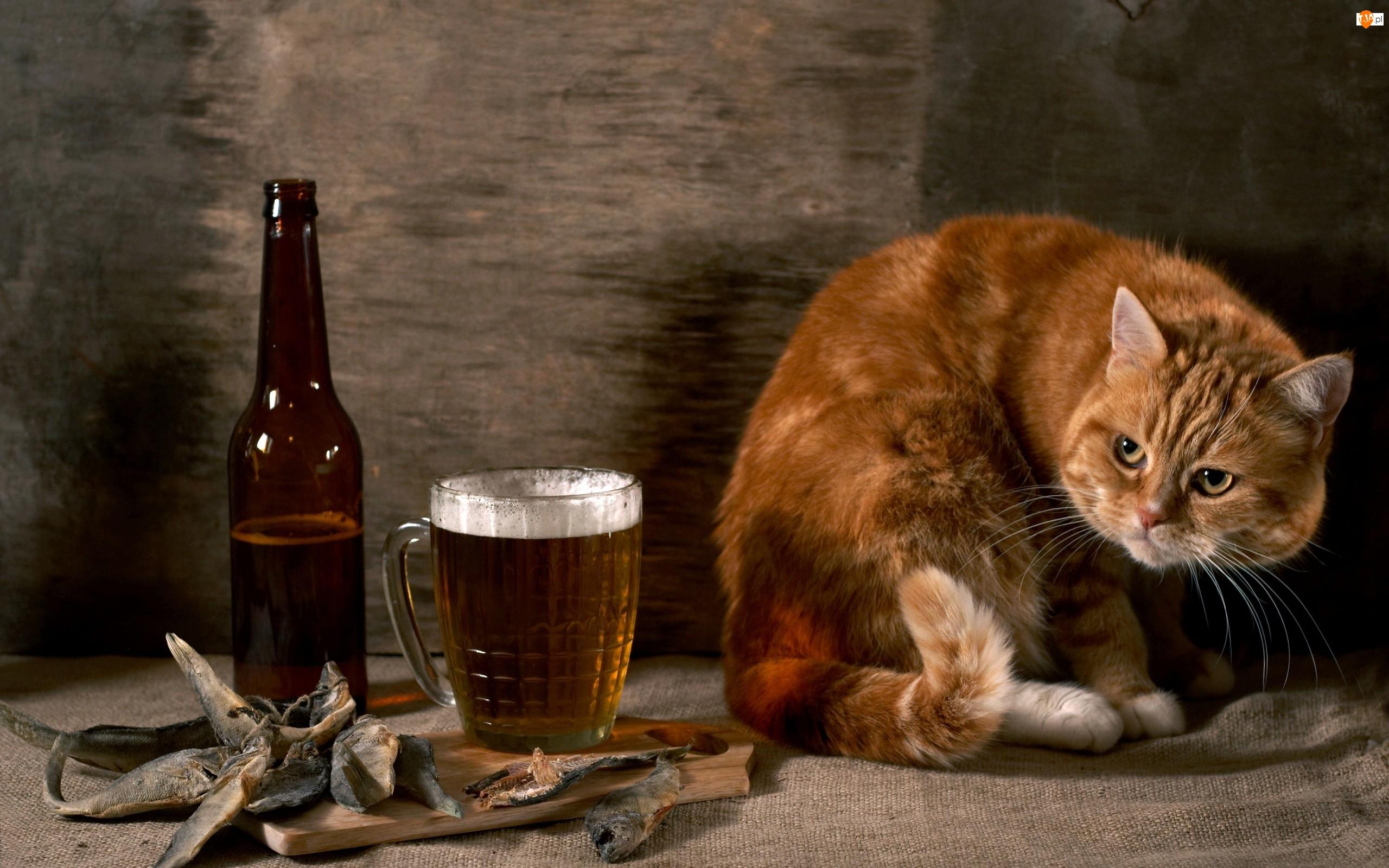 Piwo, Suszone, Rudy, Rybki, Kot, Butelka