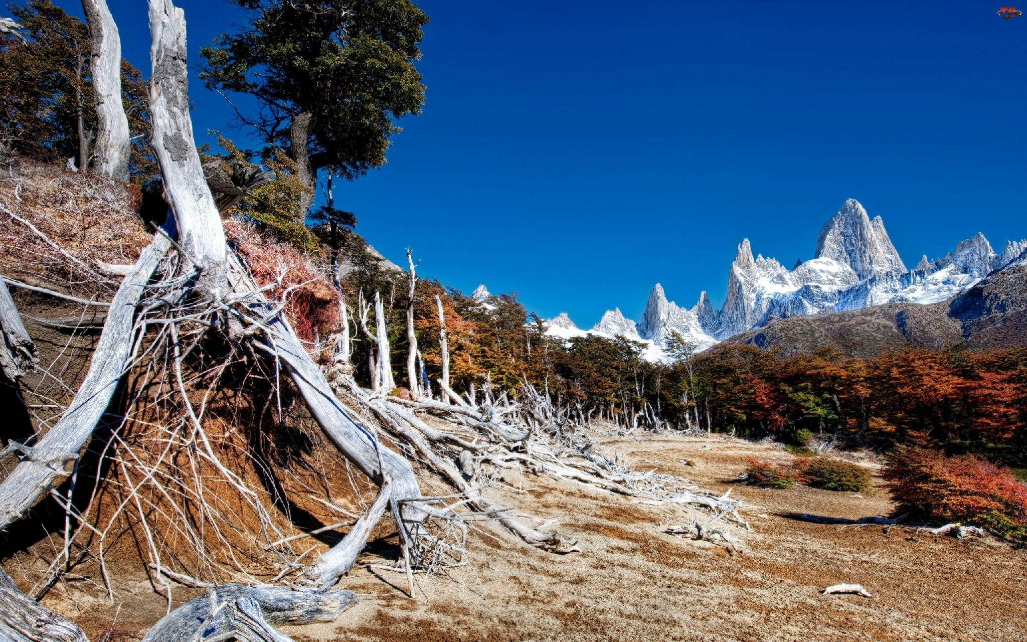 Góry, Konary, Drzew, Las