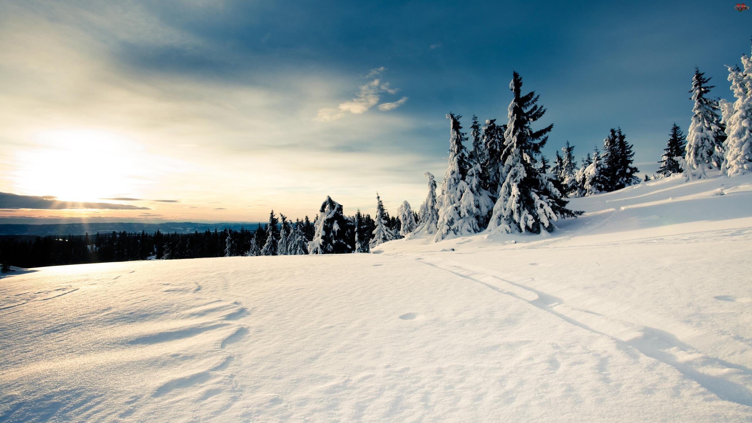 Śnieg, Mróz, Zaspy, Las