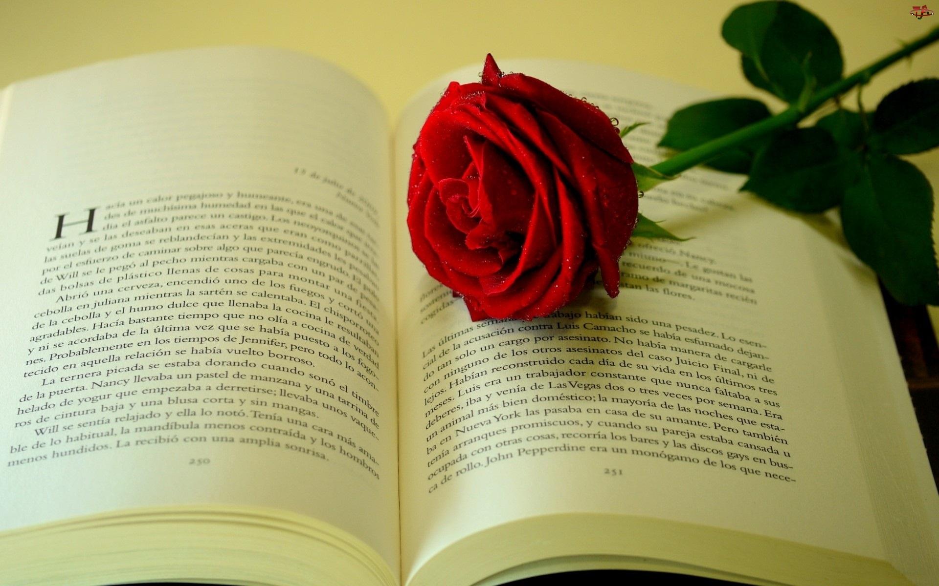 Róża, Książka, Czerwona