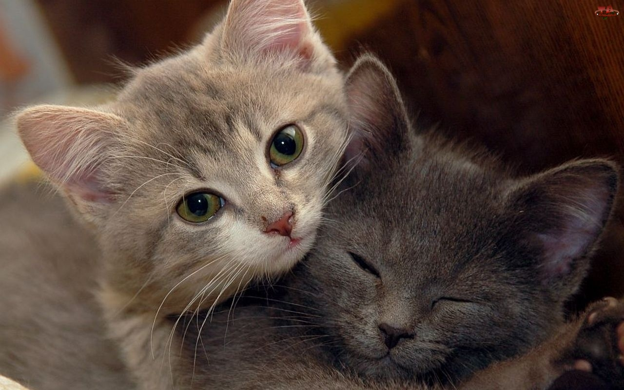 Kotki, Dwa, Małe