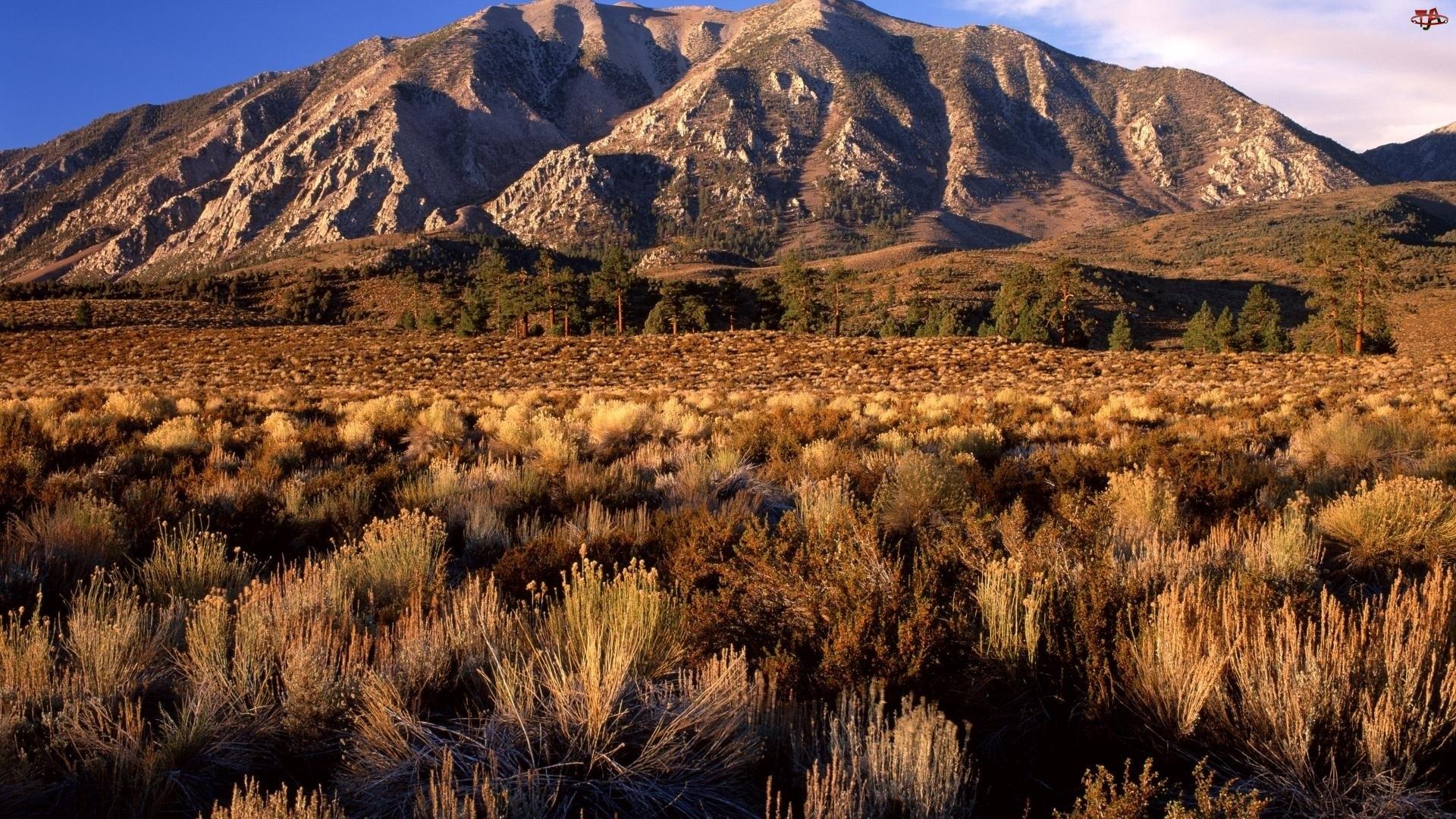 Krzewinki, Góry, Kalifornia