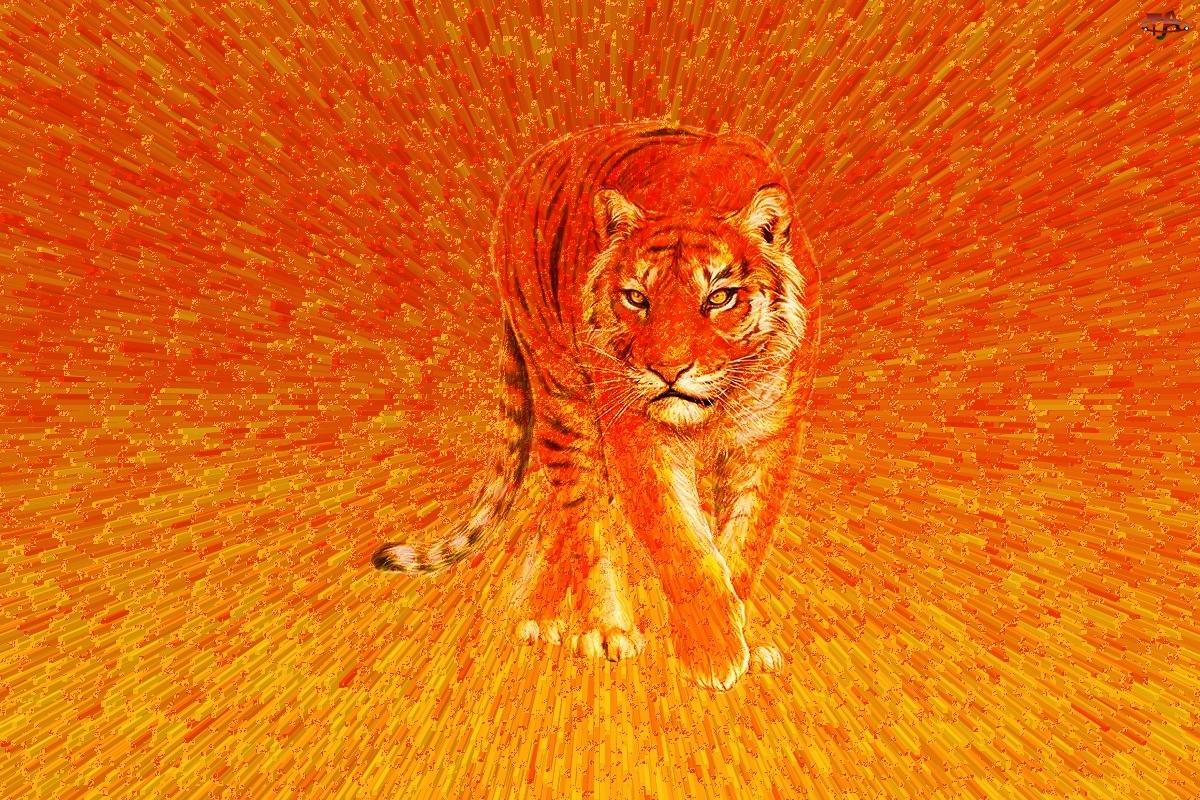 Pomarańcz, Tygrys, Kot, 3d, Paski