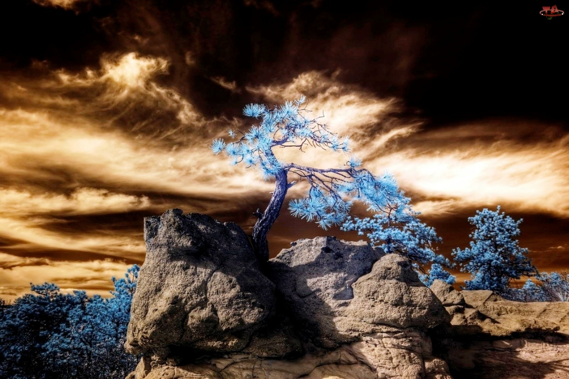 Drzewa, Zachód, Skały, Słońca, Niebieskie