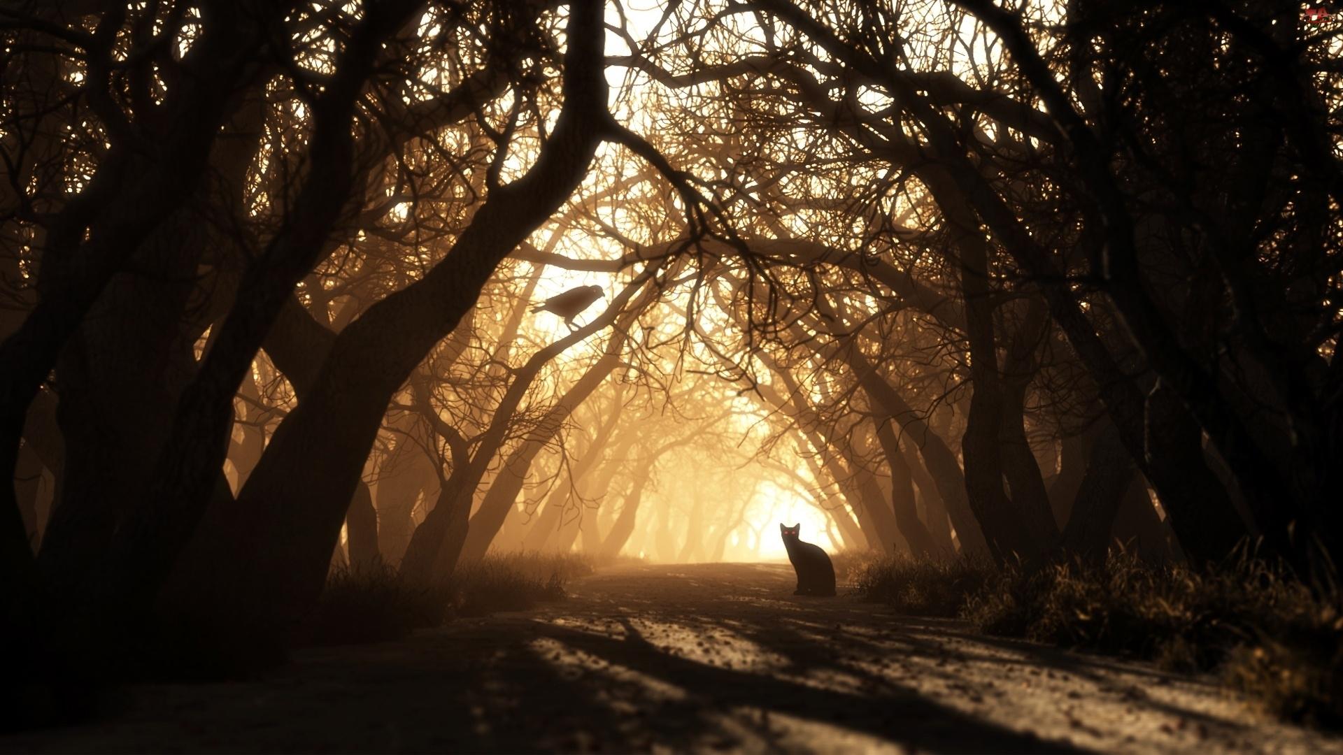 Droga, Kot, Drzewa, Ptak