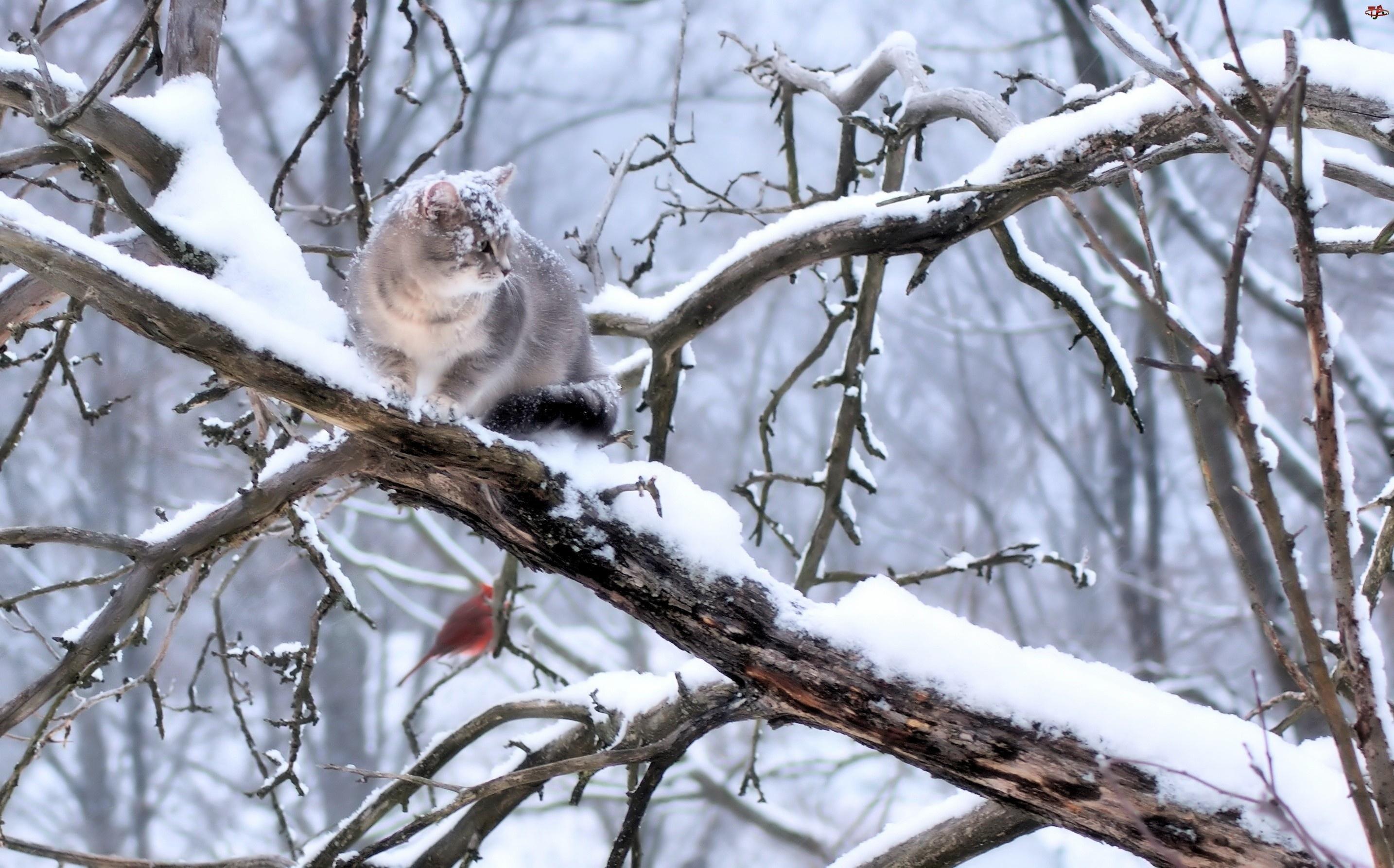 Ptaszek, Zima, Gałęzie, Ośnieżone, Kot