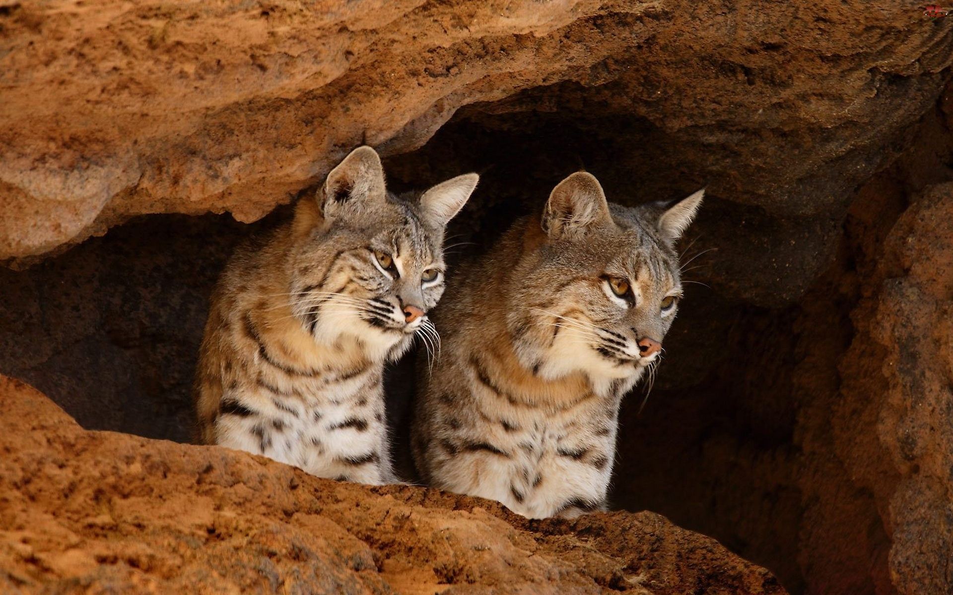 Jaskinia, Rysie