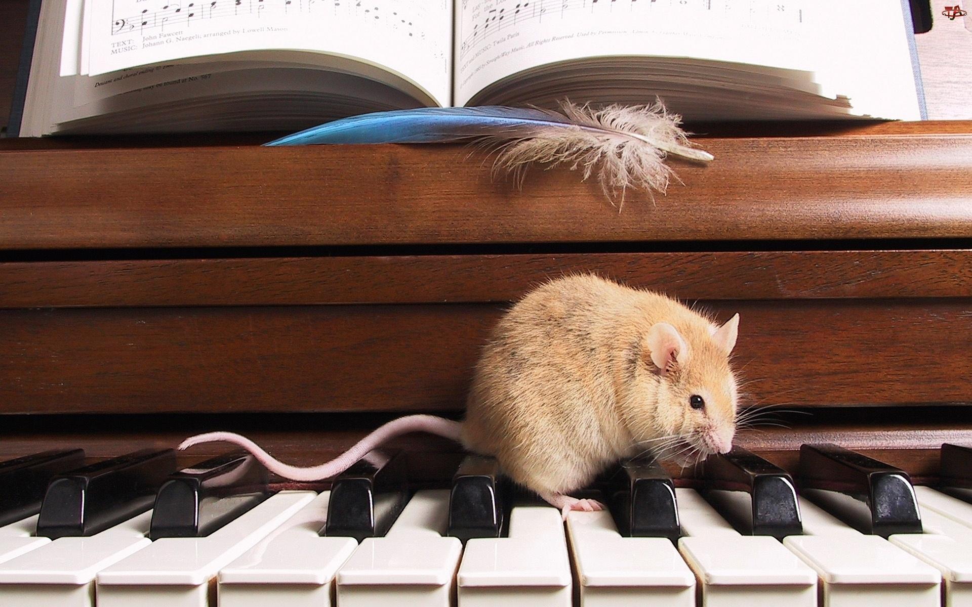 Myszka, Nuty, Pianino, Klawiatura