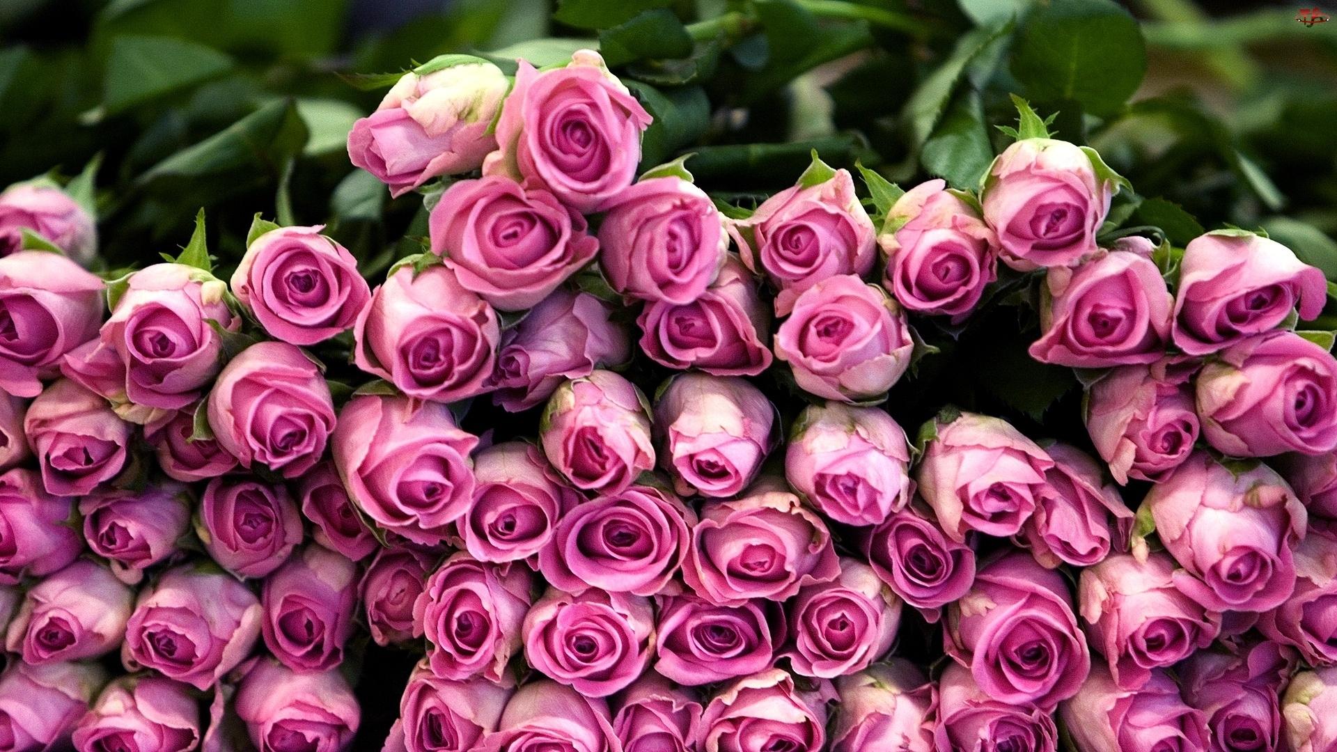 Różowe, Kwiatów, Róże, Stos