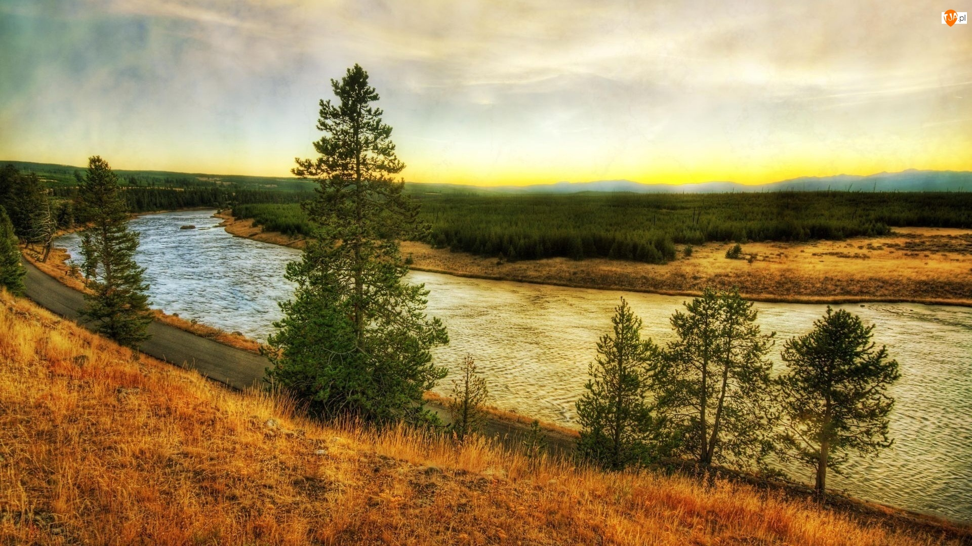 Rzeka, Drzewa, Nurt, Brzegi