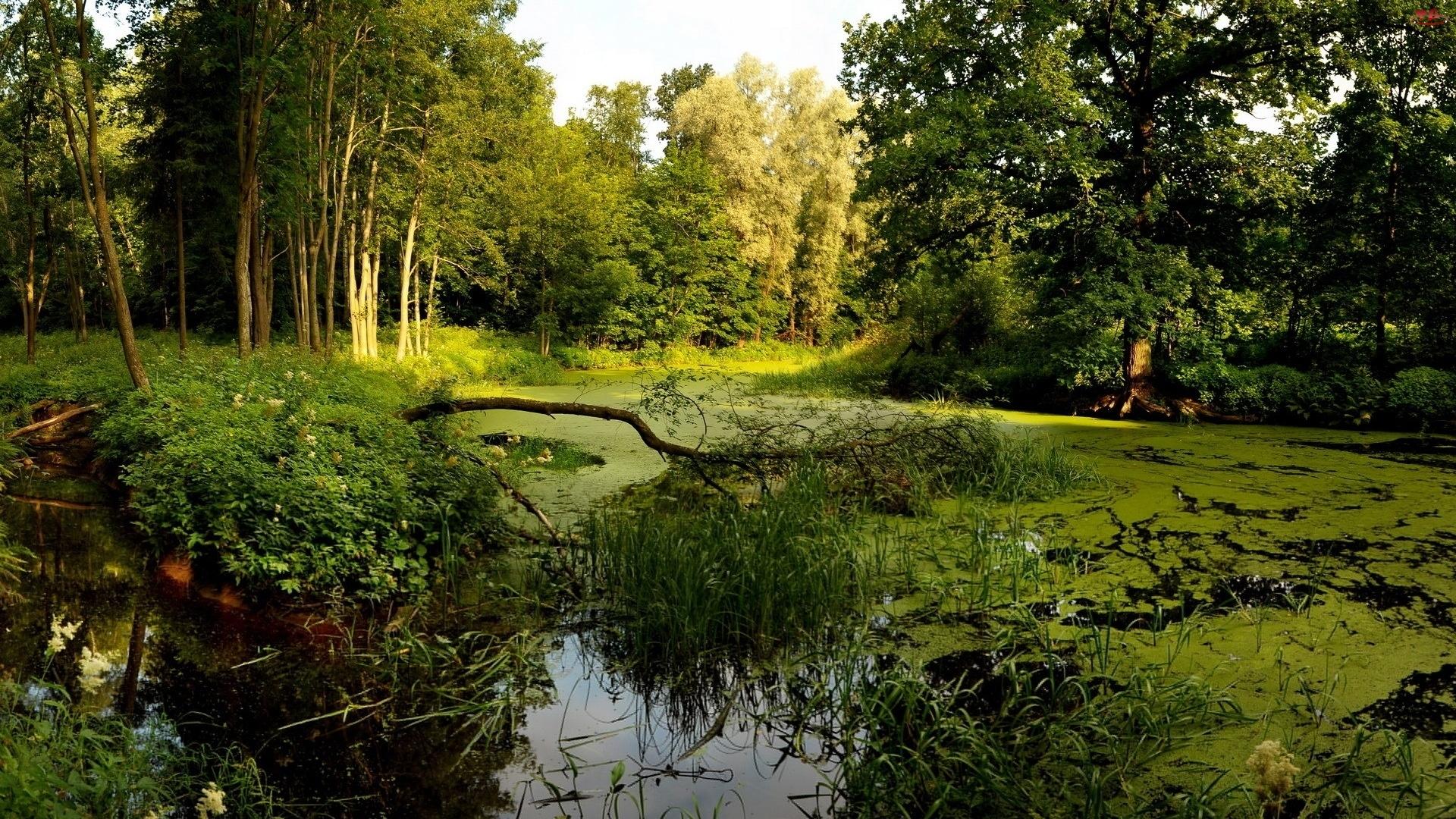 Trzciny, Rzeka, Drzewa