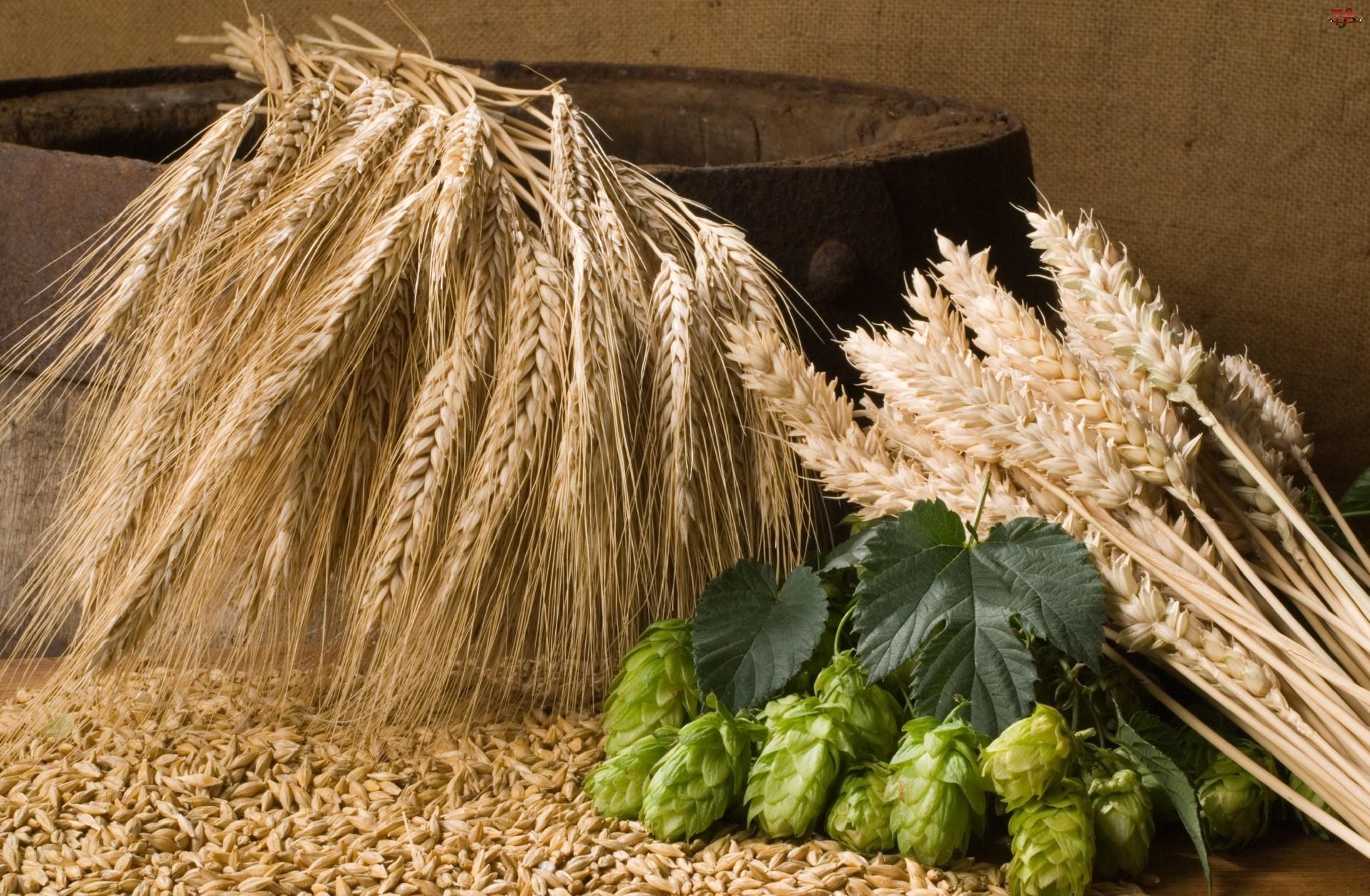 Zbóż, Kłosy, Ziarna