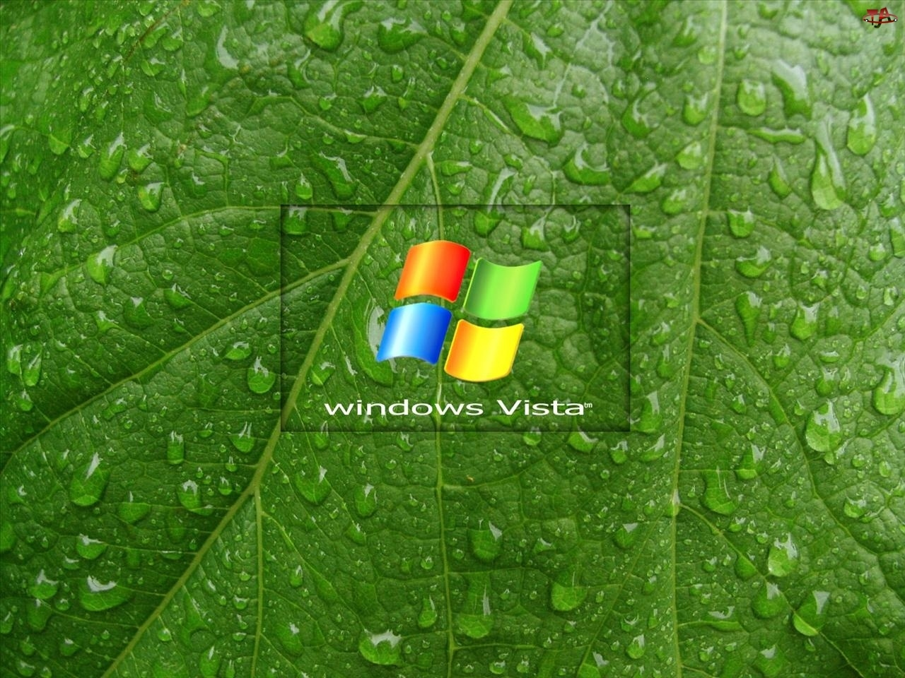 Wody, Windows, Liść, Vista, Krople