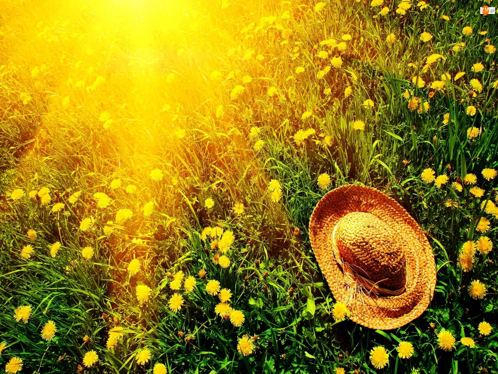 Promienie Słońca, Mlecze, Łąka, Kapelusz
