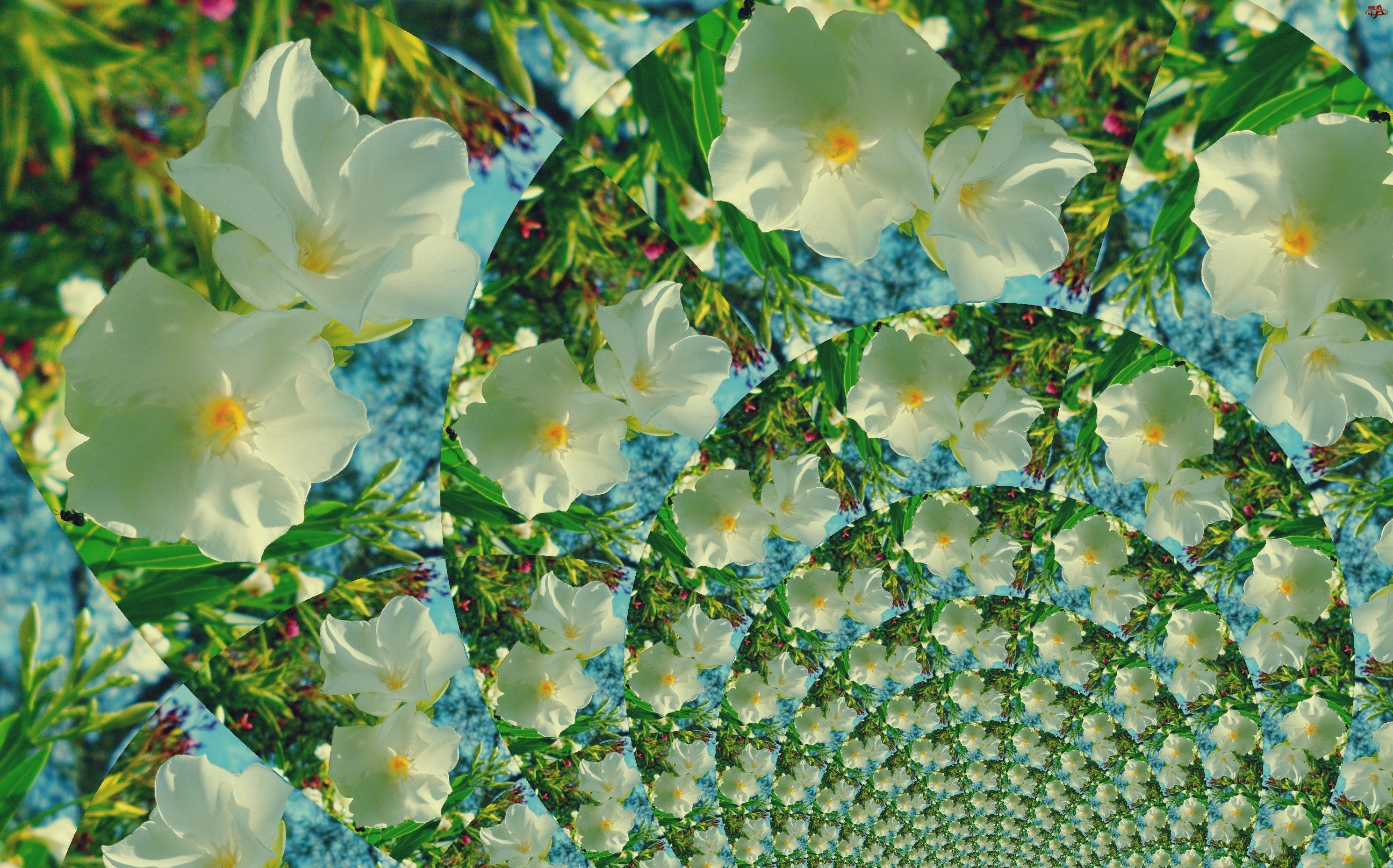 Tunel, Grafika, Białych, Kwiatów