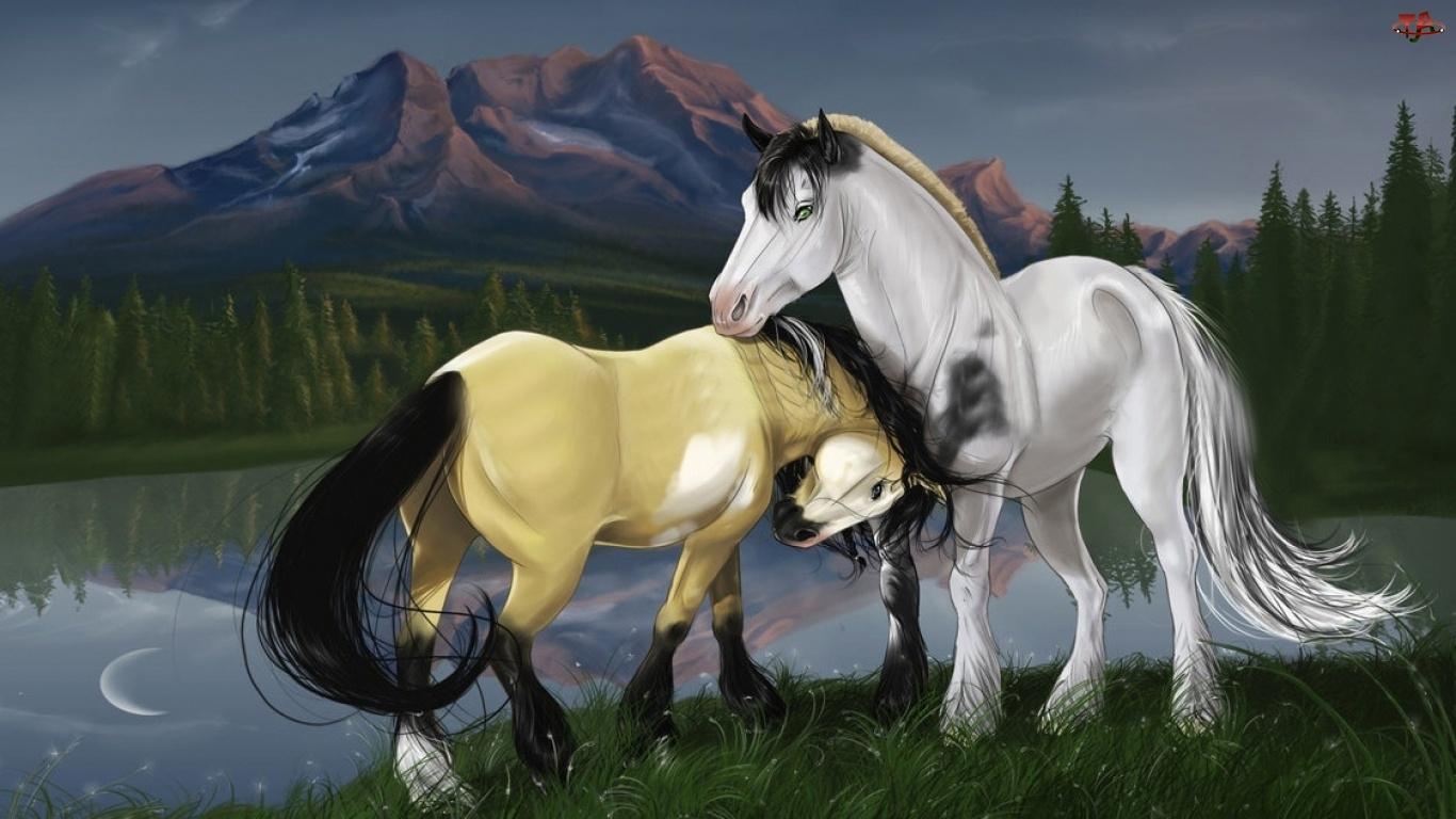 Konie, Miłość