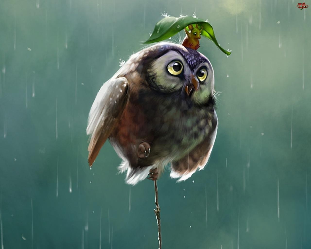 Deszcz, Sowa, Myszka