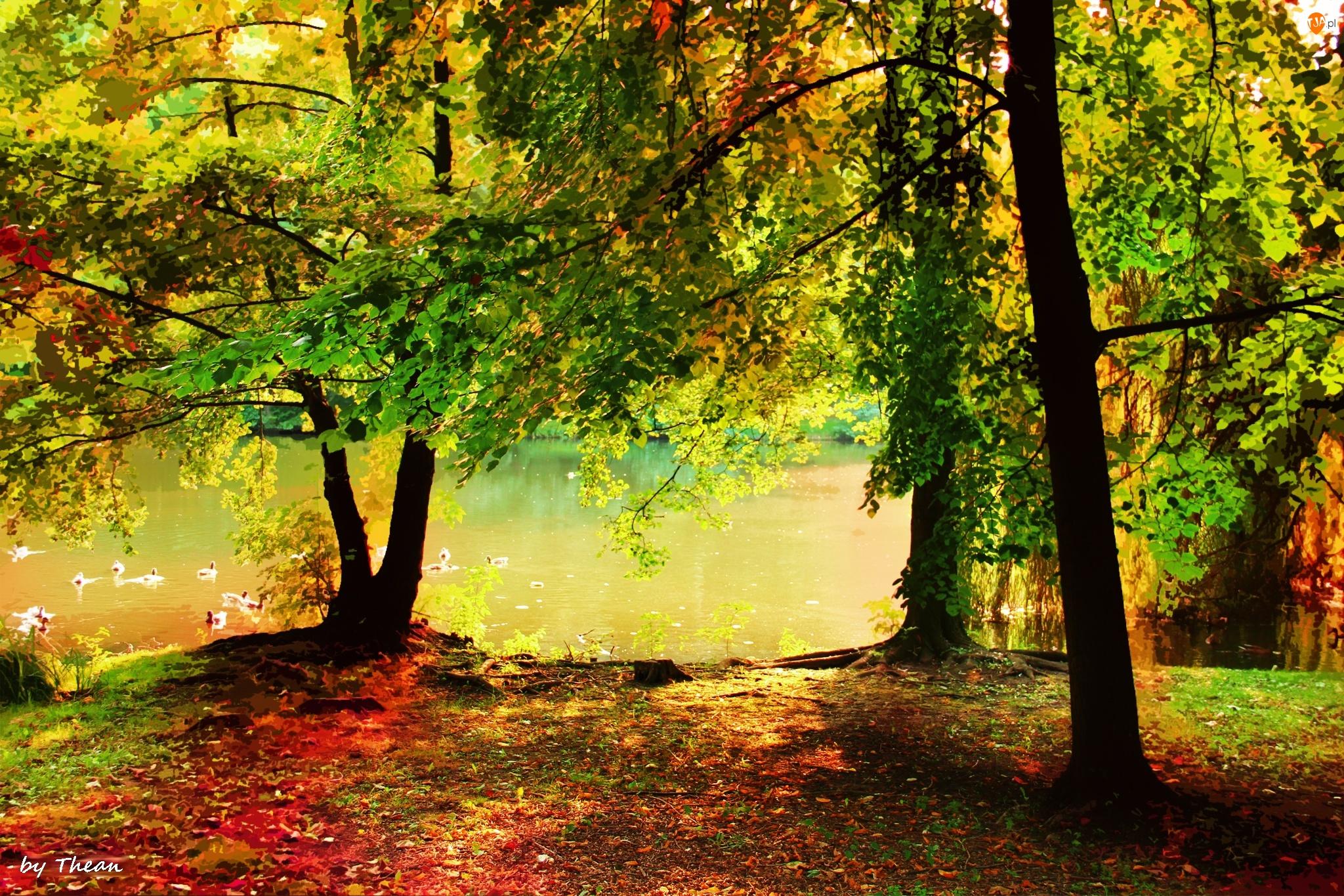 Drzewa, Staw, W, Parku