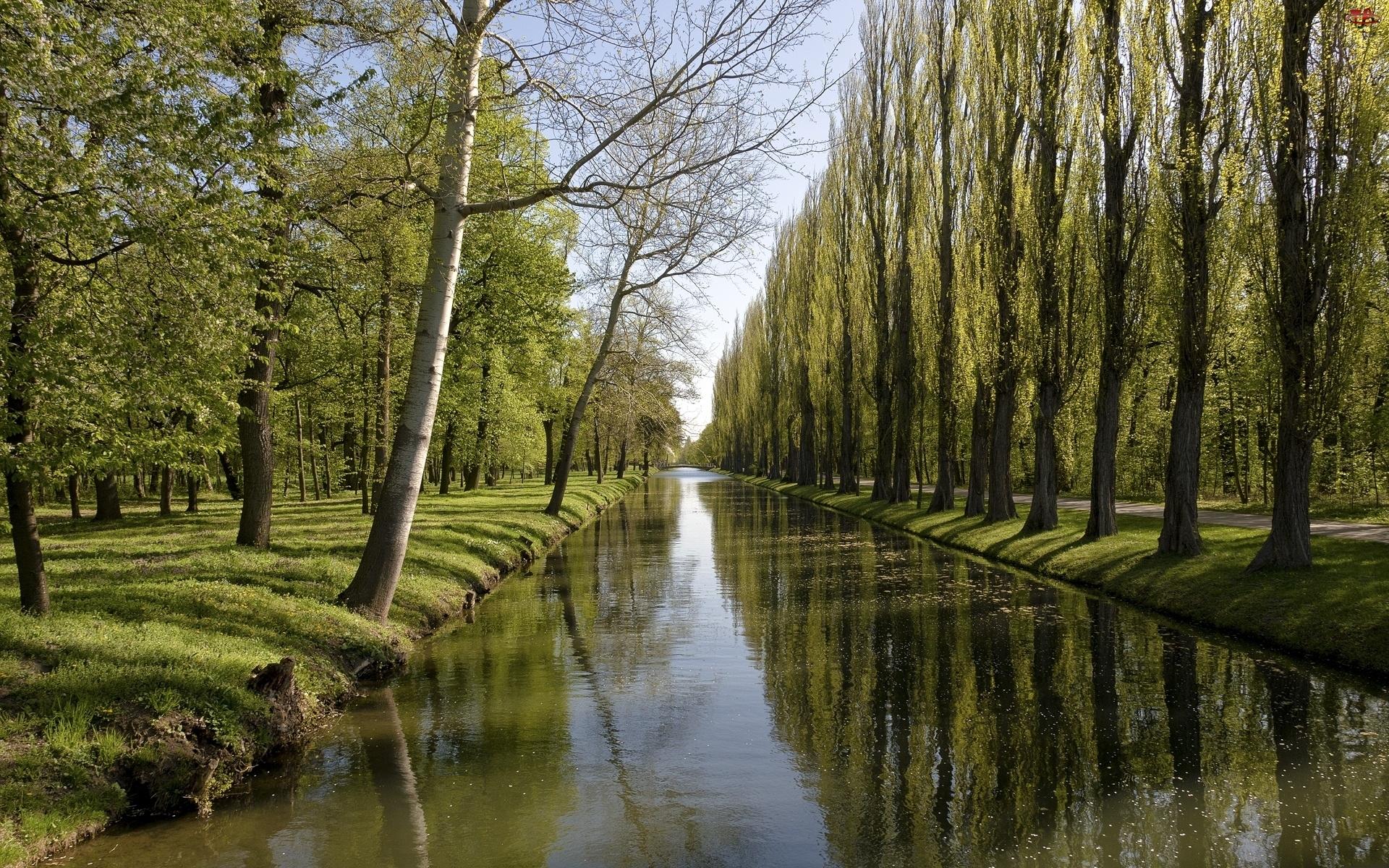 Most, Rzeka, Drzewa