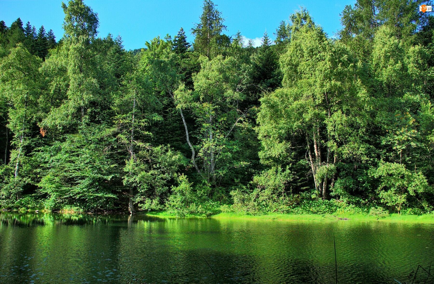 Drzewa, Jeziora, Na, Brzegu