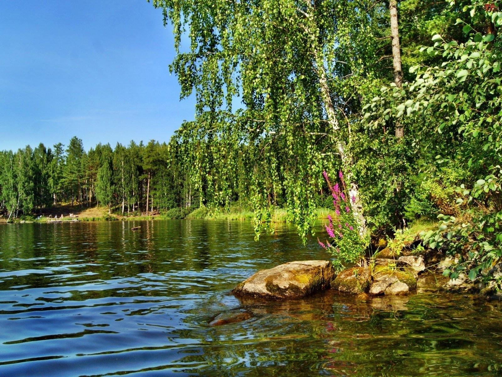 Jezioro, Las, Brzeg, Brzoza